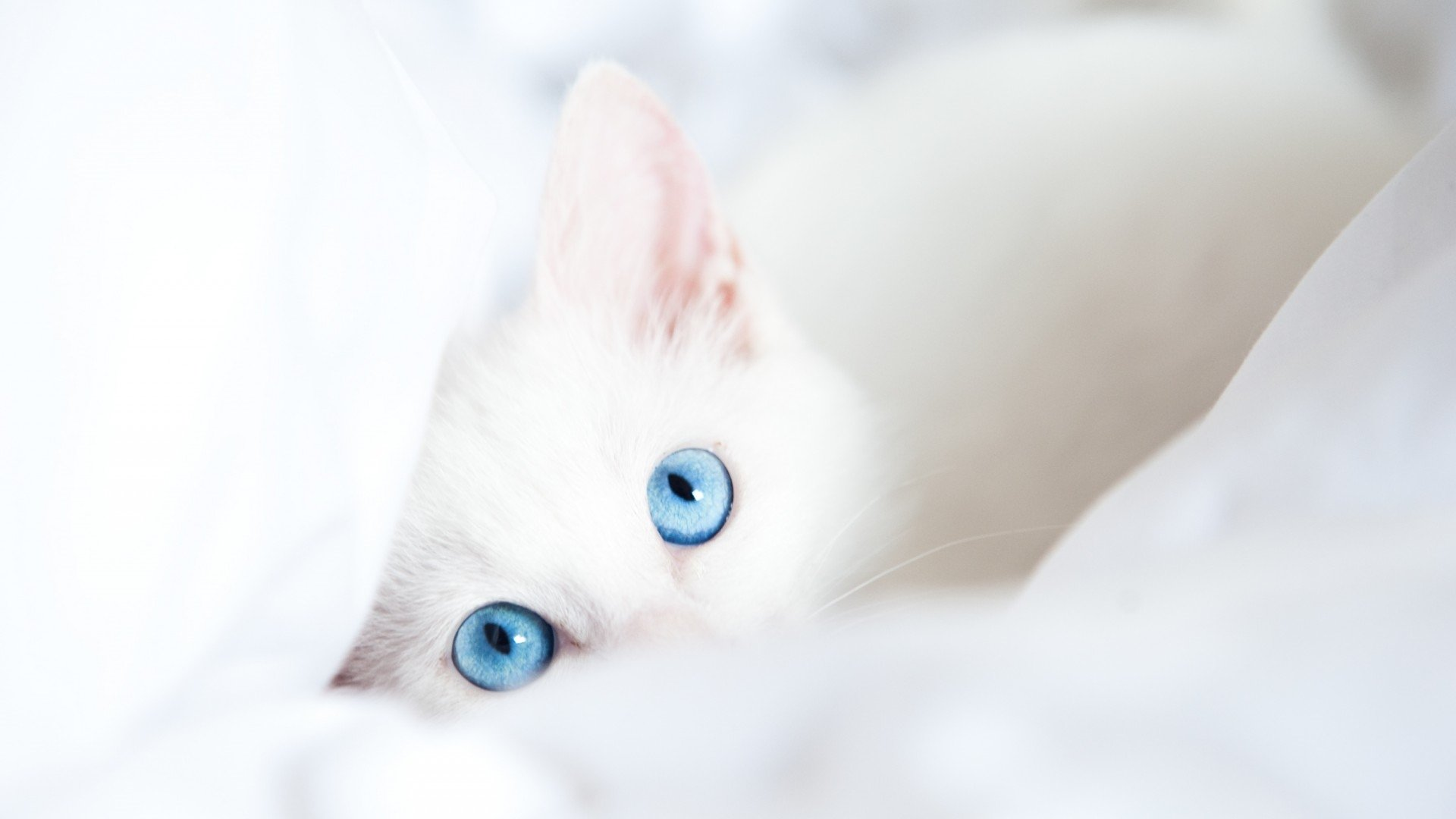 Cute White Wallpaper Download Full