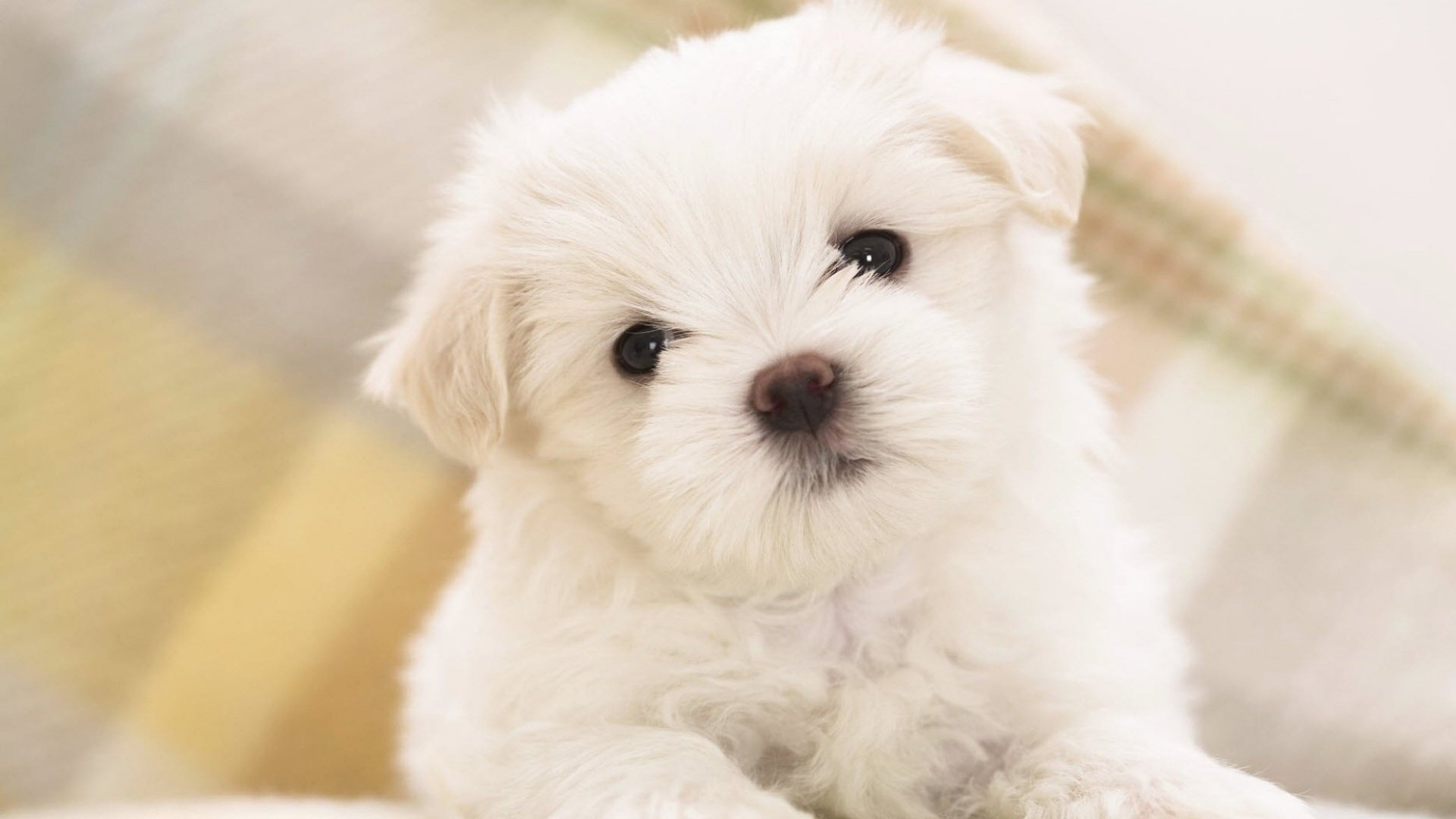 Cute White Wallpaper Free