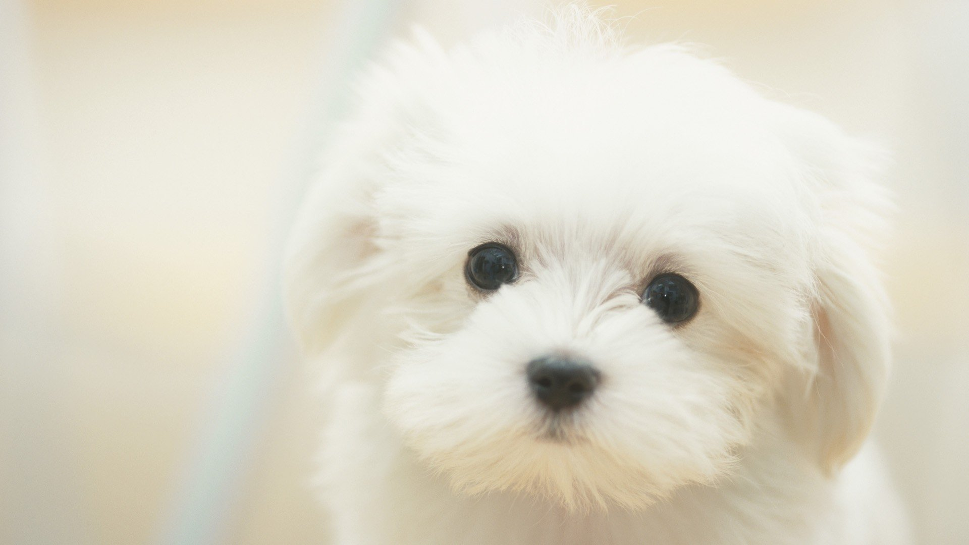 Cute White Wallpaper Full HD