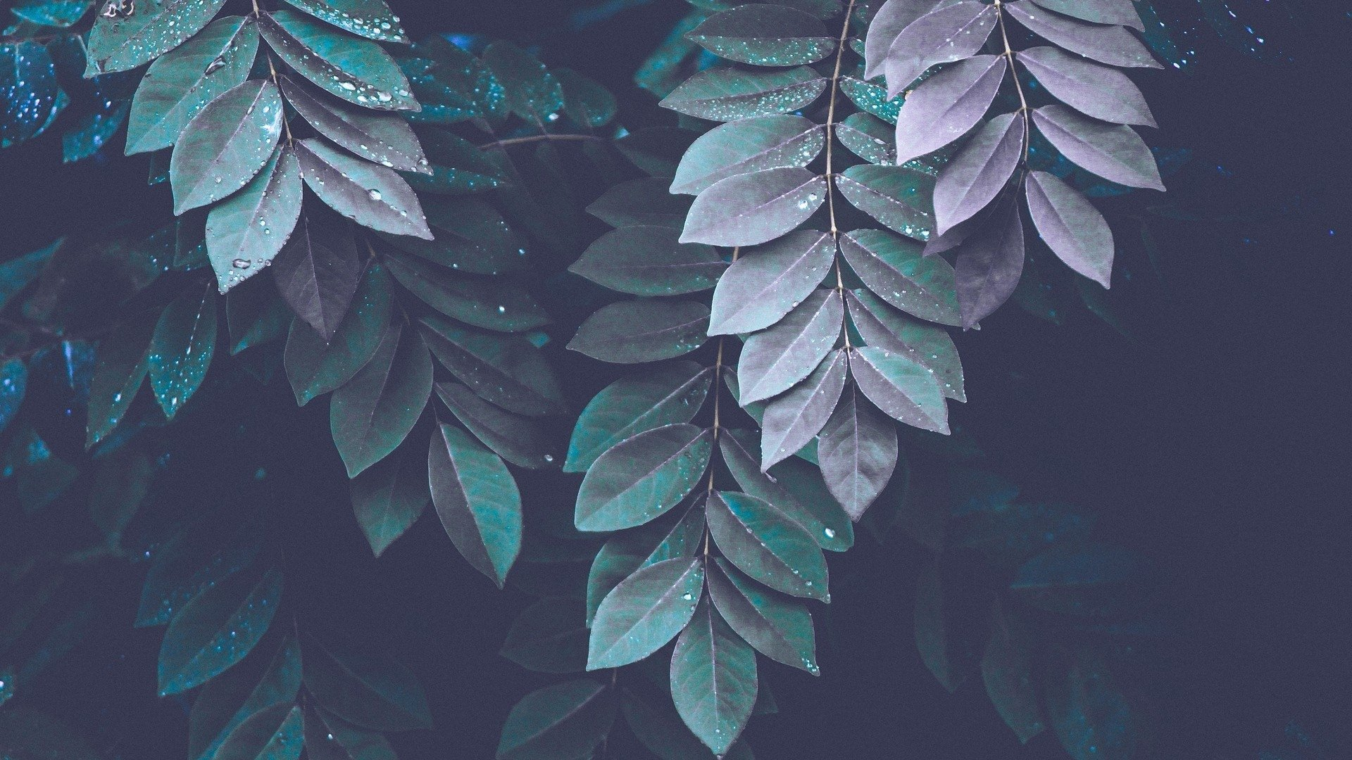 Green Aesthetic Wallpaper
