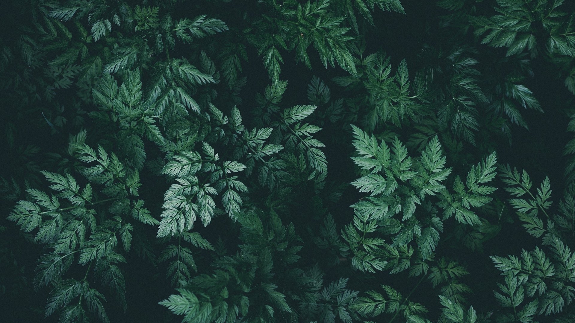 Green Aesthetic Wallpaper Download Full