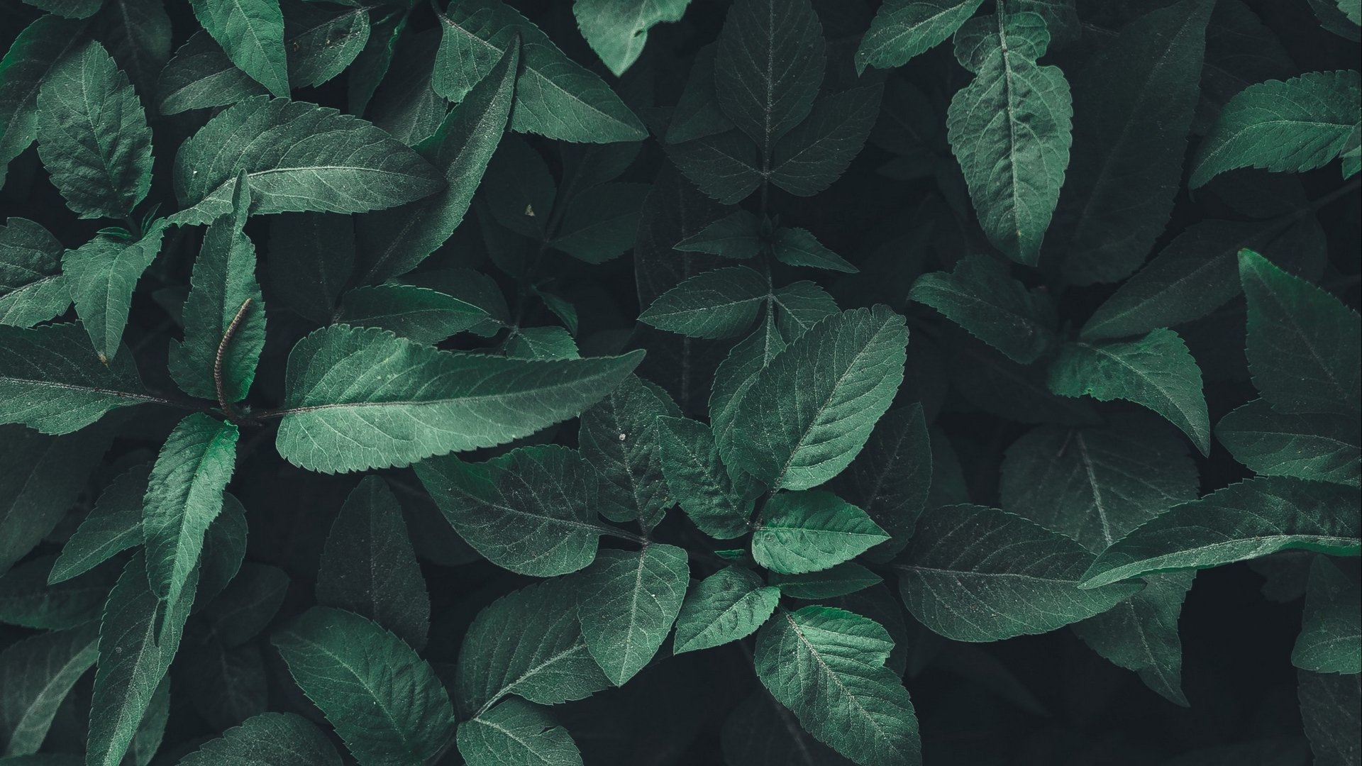 Green Aesthetic Wallpaper Download
