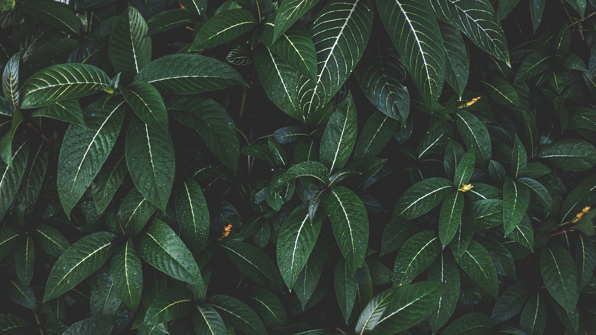 Green Aesthetic Wallpaper Free