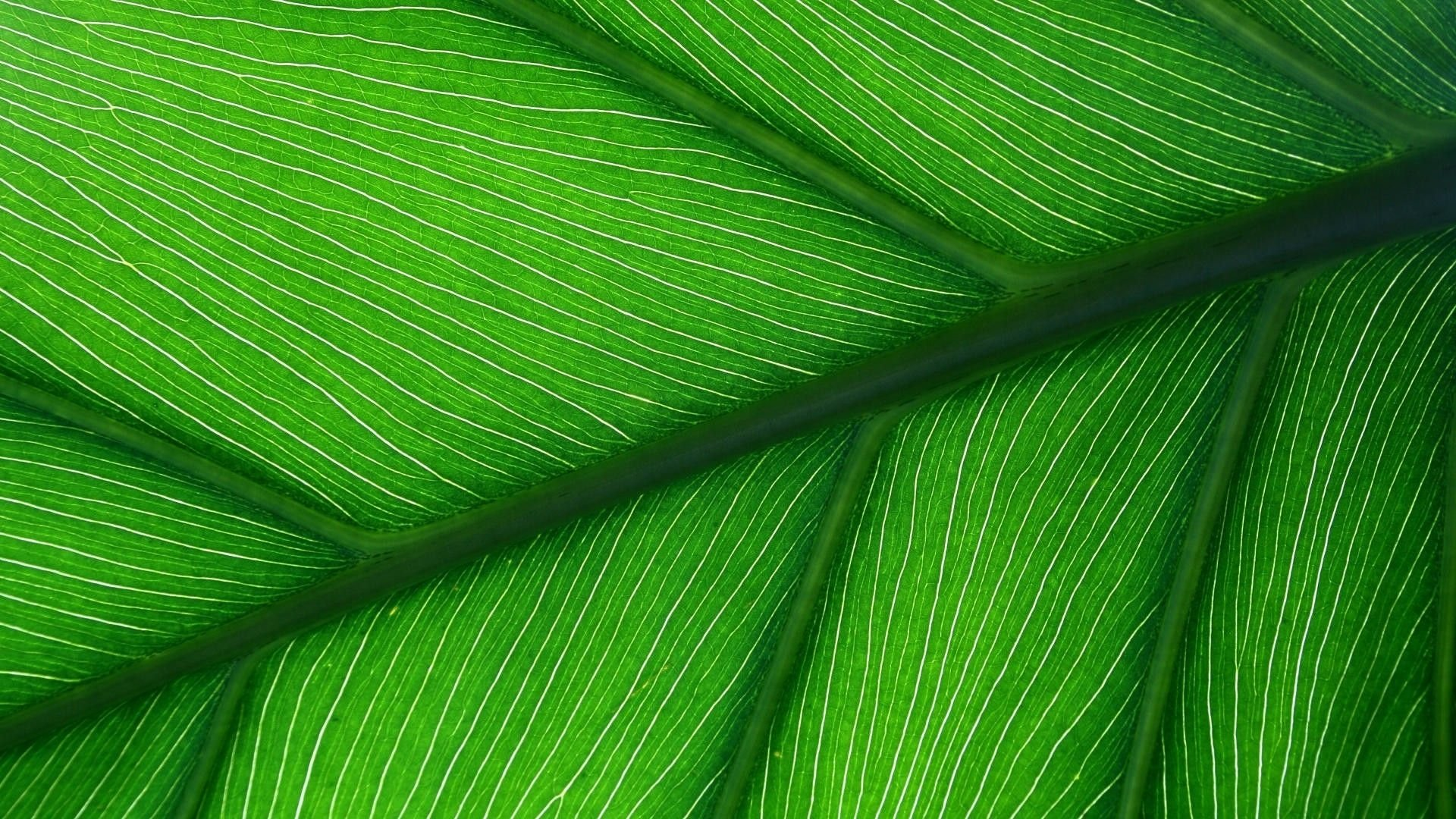 Green Aesthetic Wallpaper Free Download