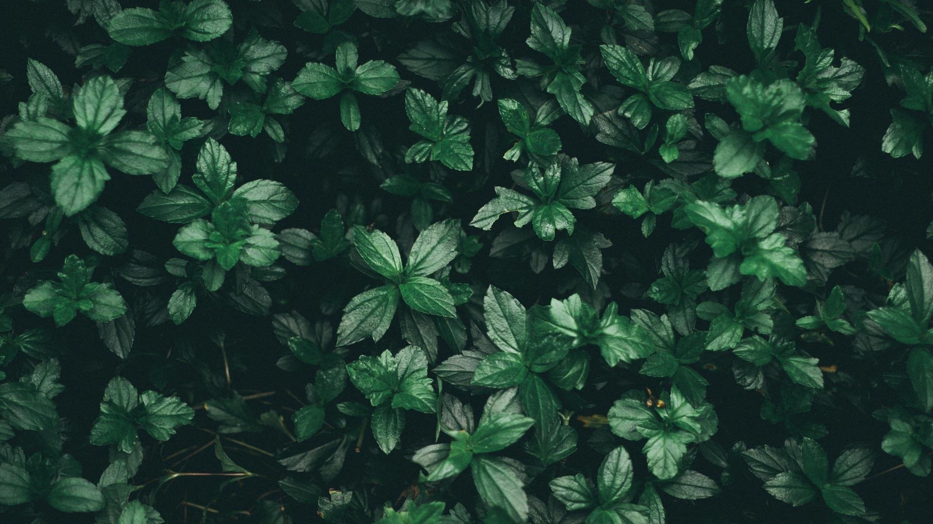 Green Aesthetic Wallpaper Image