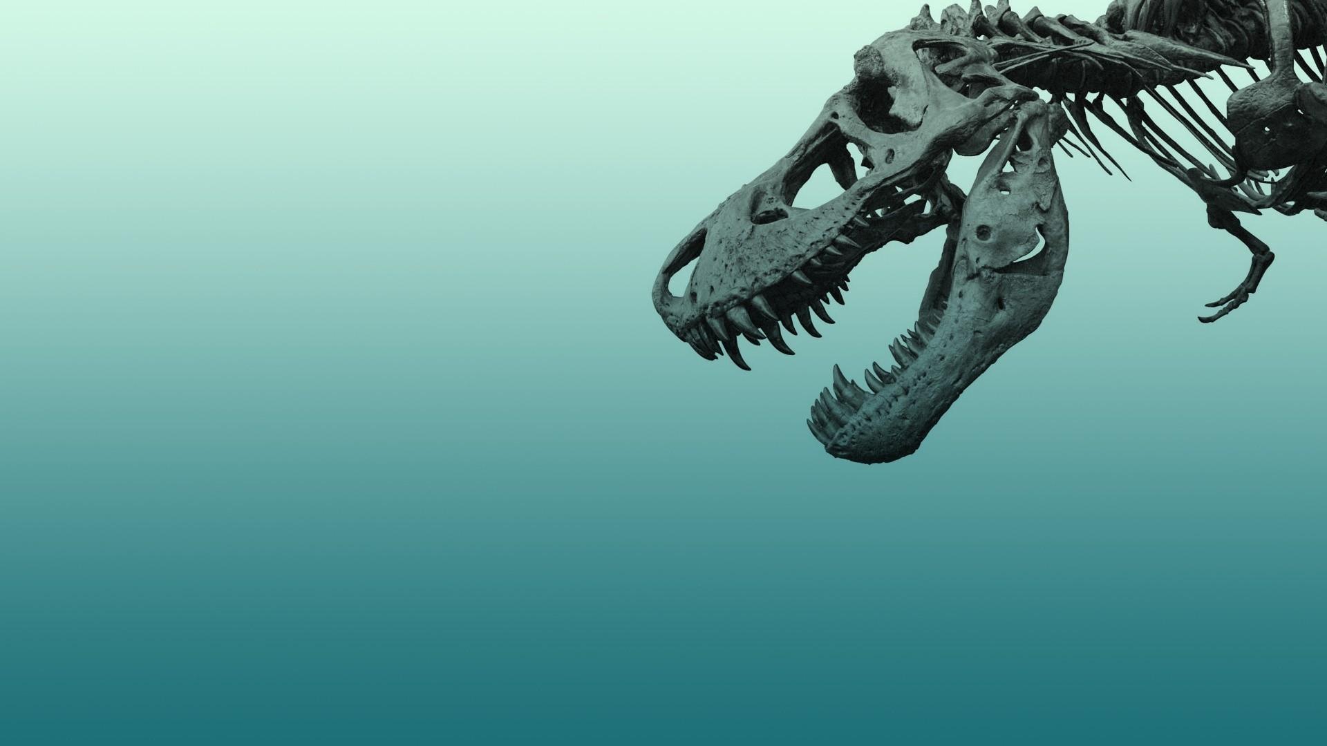 Minimalist Dinosaur Wallpaper Pic