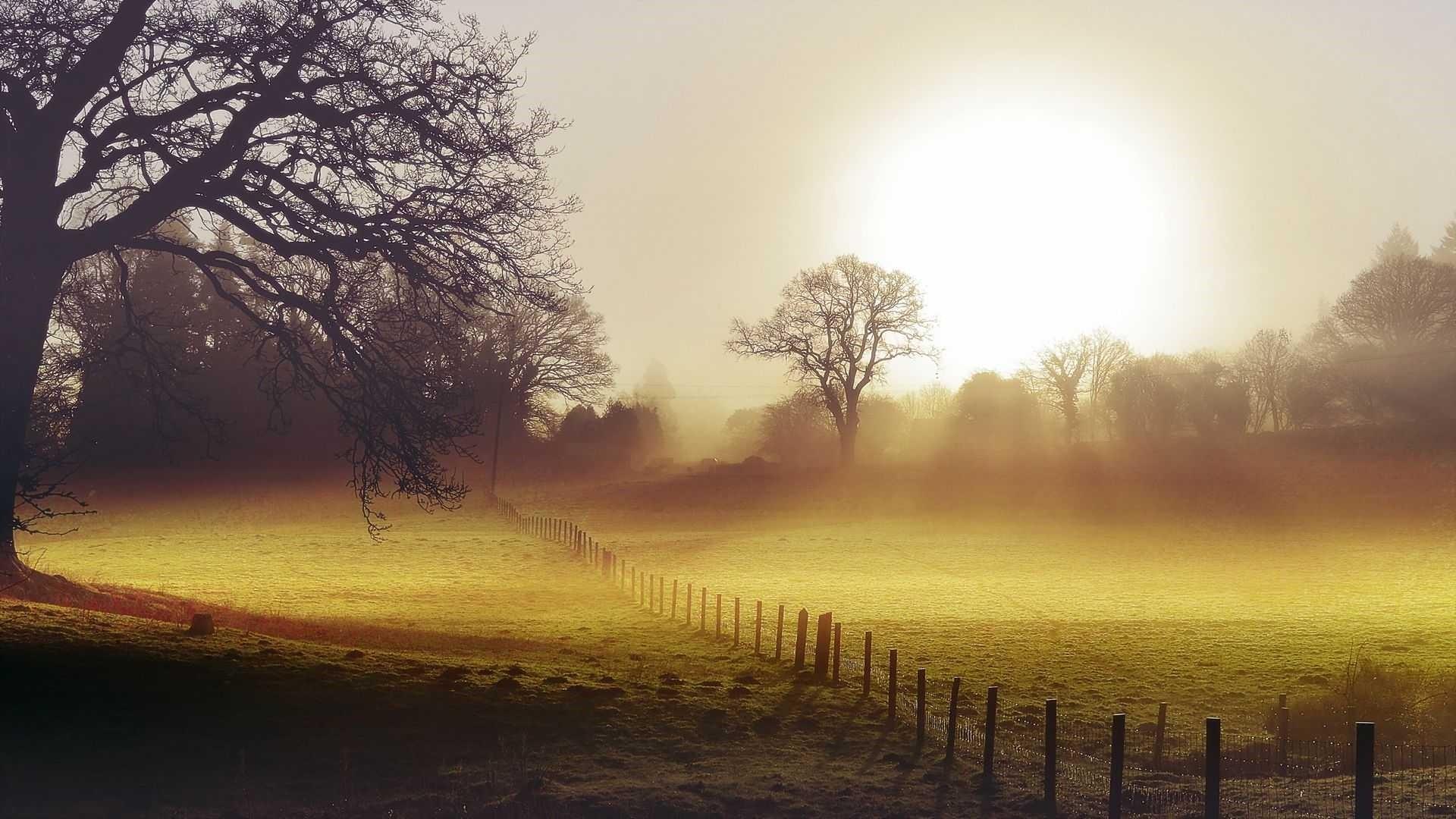 Morning Wallpaper HD