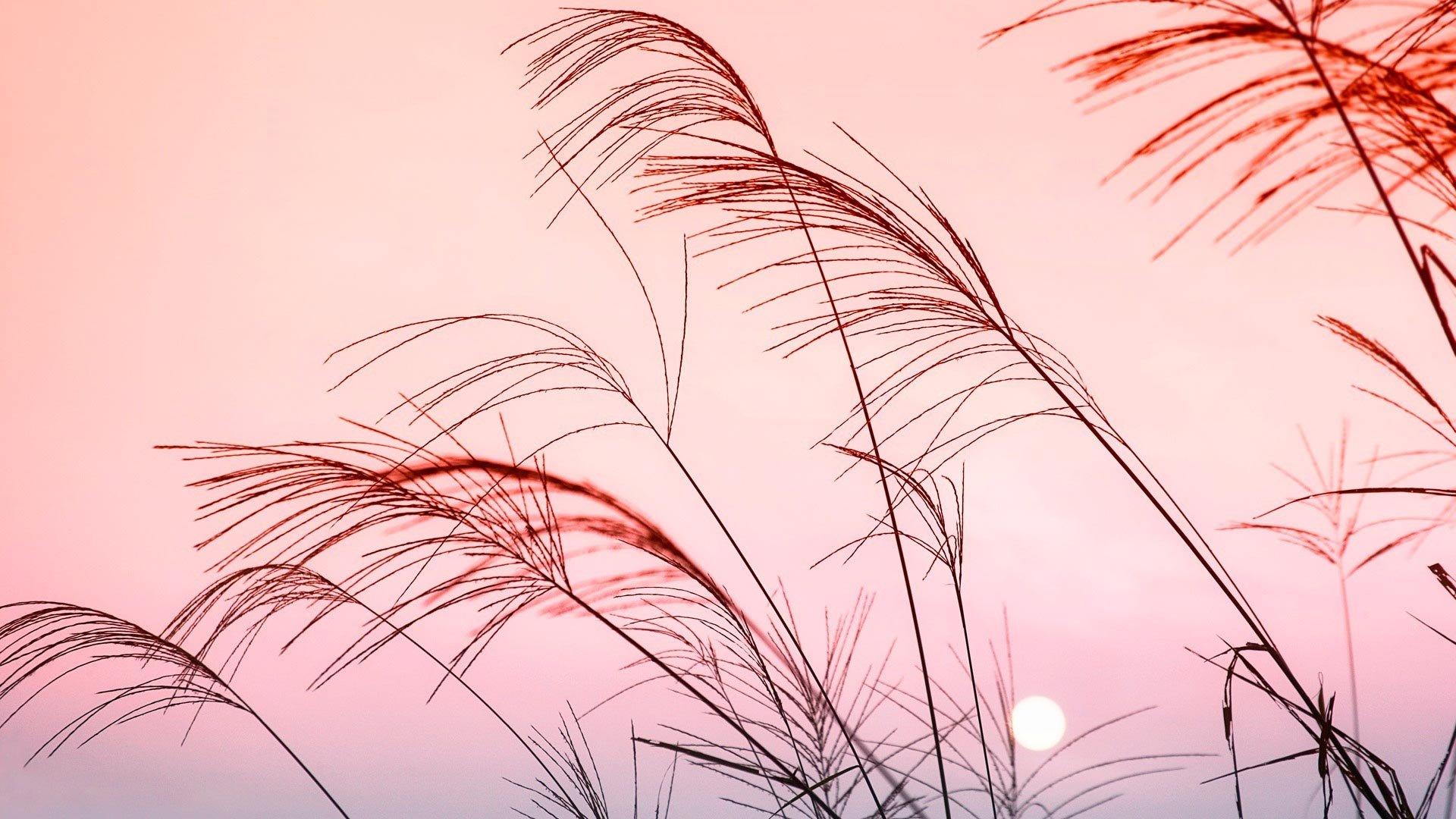 Pastel Aesthetic Wallpaper Full HD