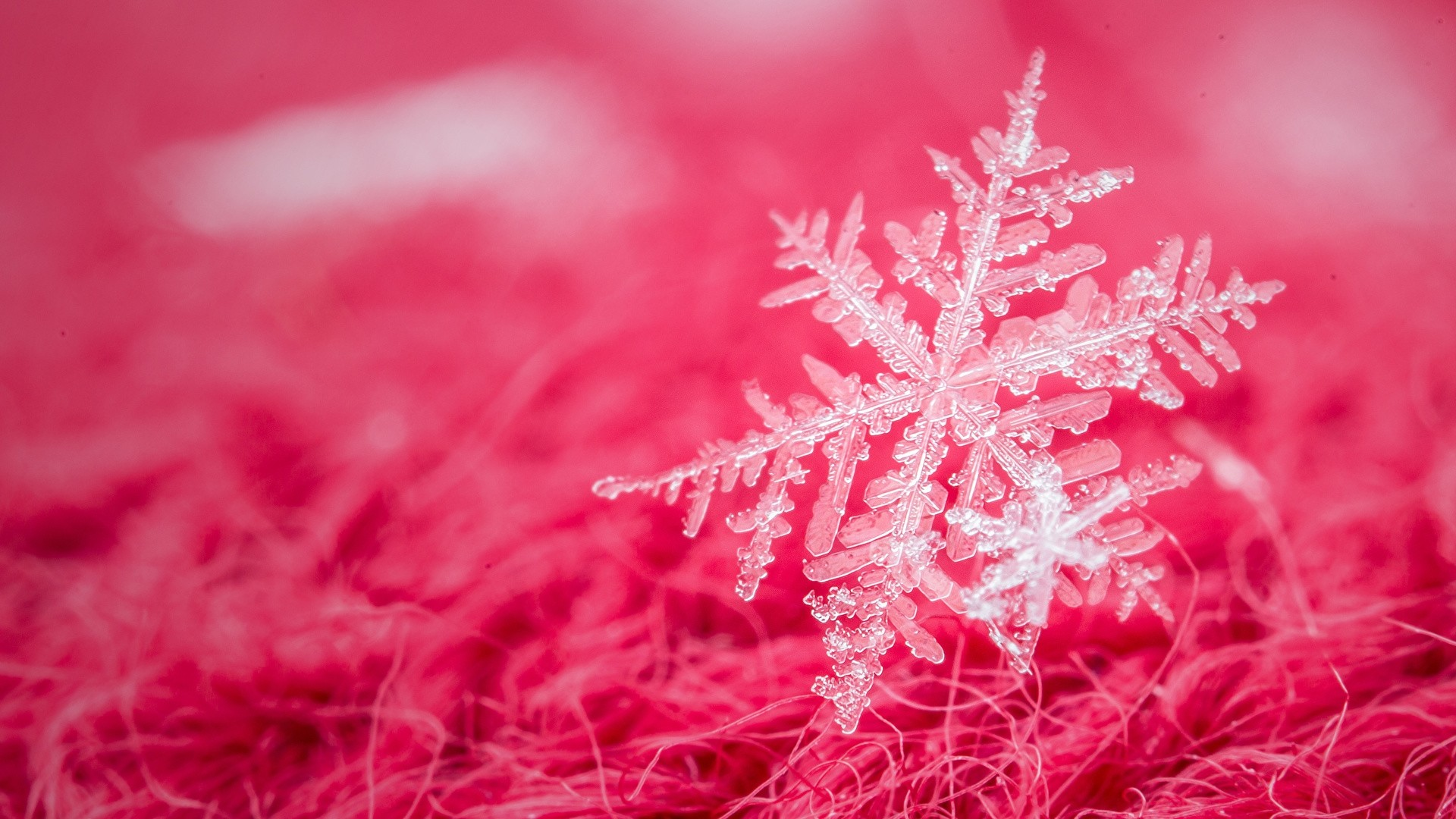 Snowflake Wallpaper Free Download