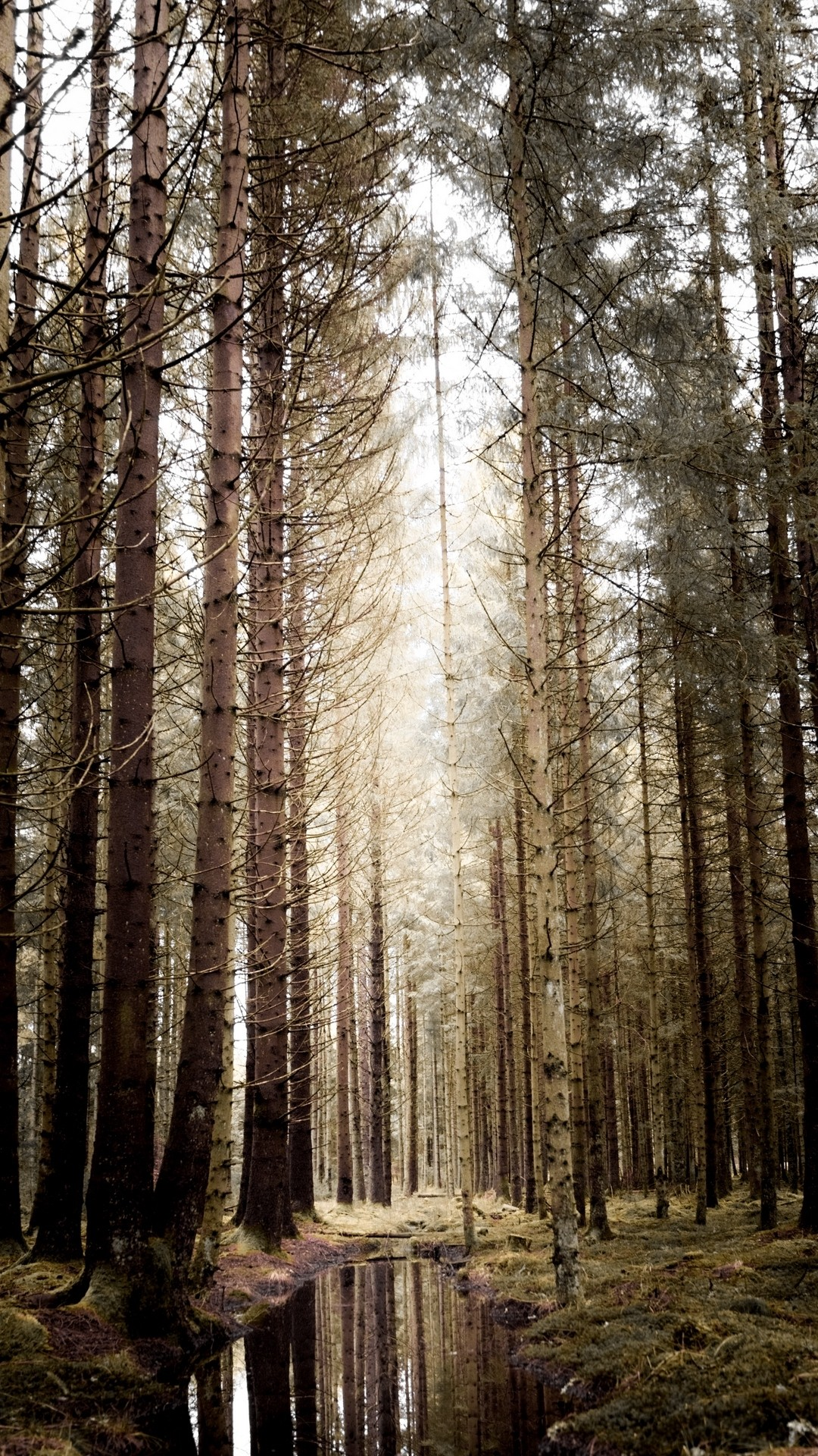 Forest iPhone 5 wallpaper