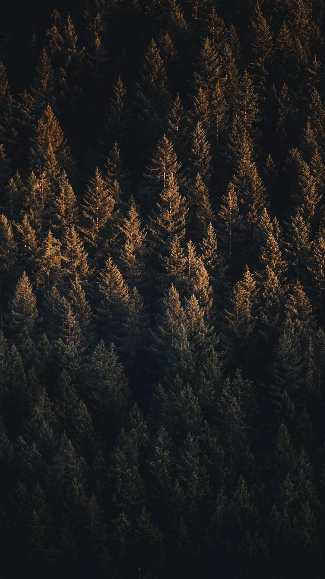 Forest wallpaper for iPhone