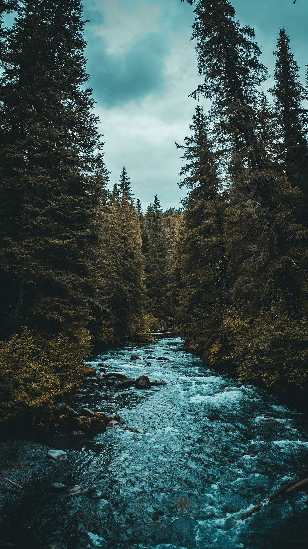 Forest wallpaper for android