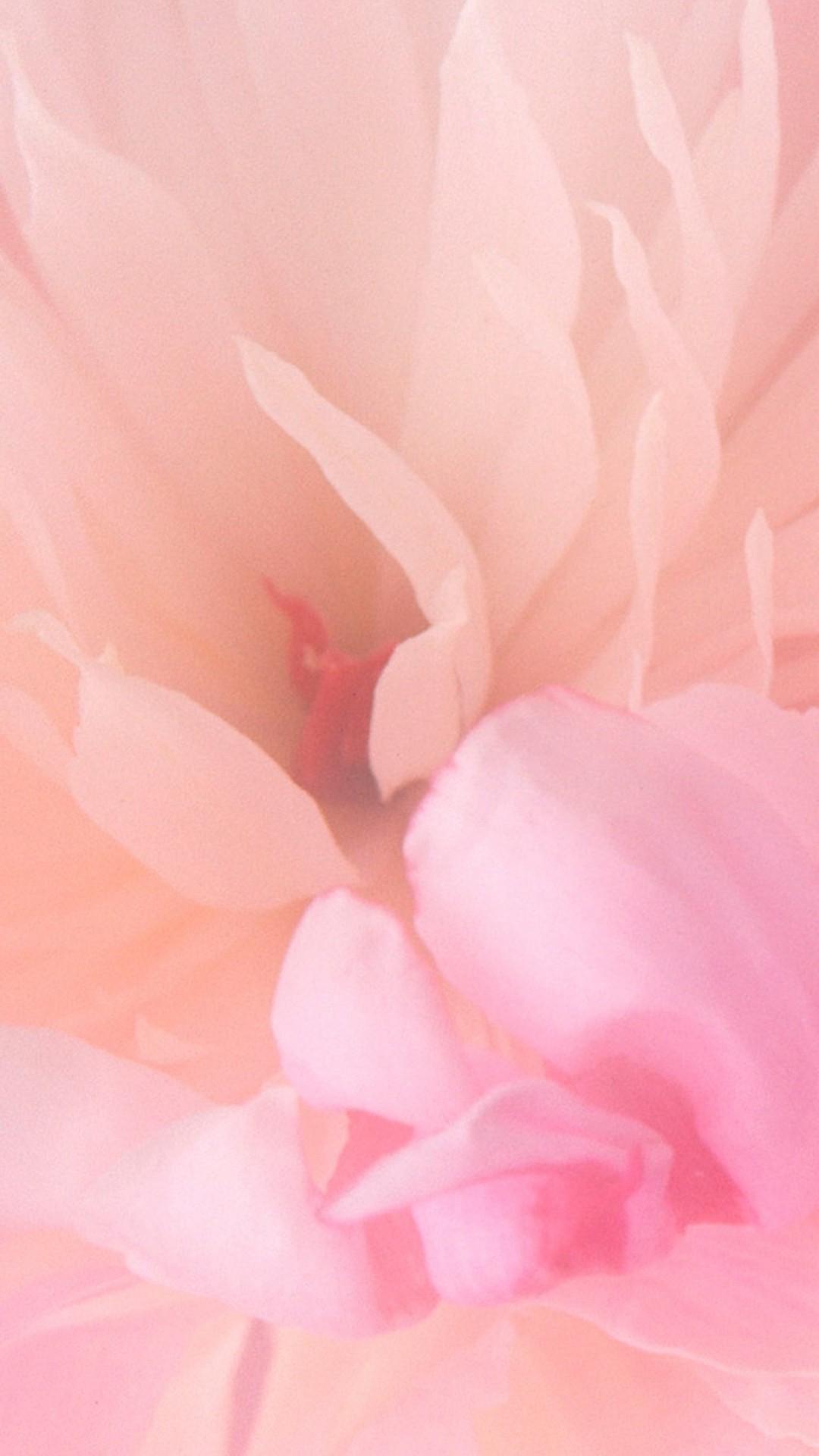 Pink iPhone hd wallpaper