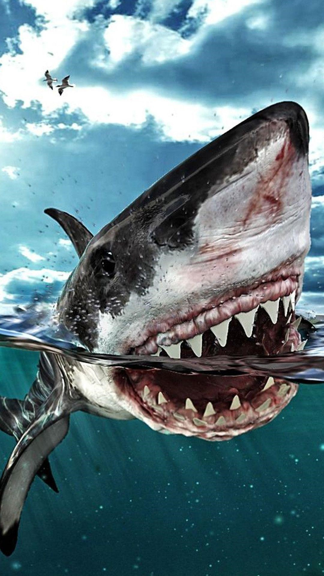 Shark phone wallpaper
