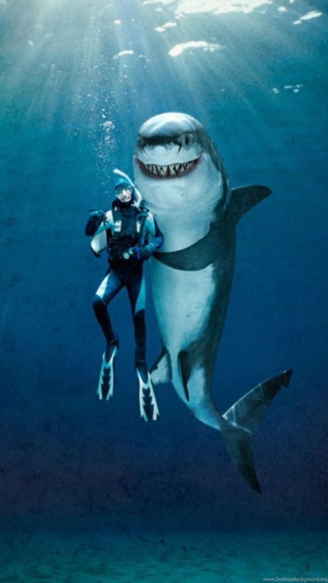 Shark iPhone 5 wallpaper