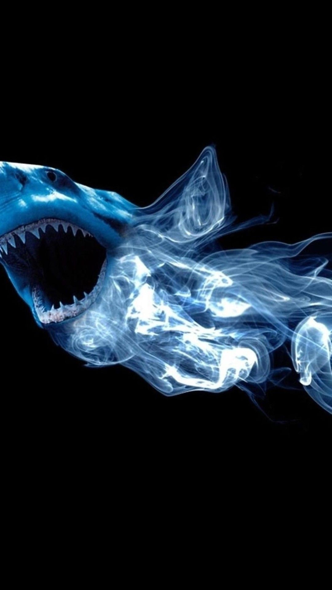 Shark phone background