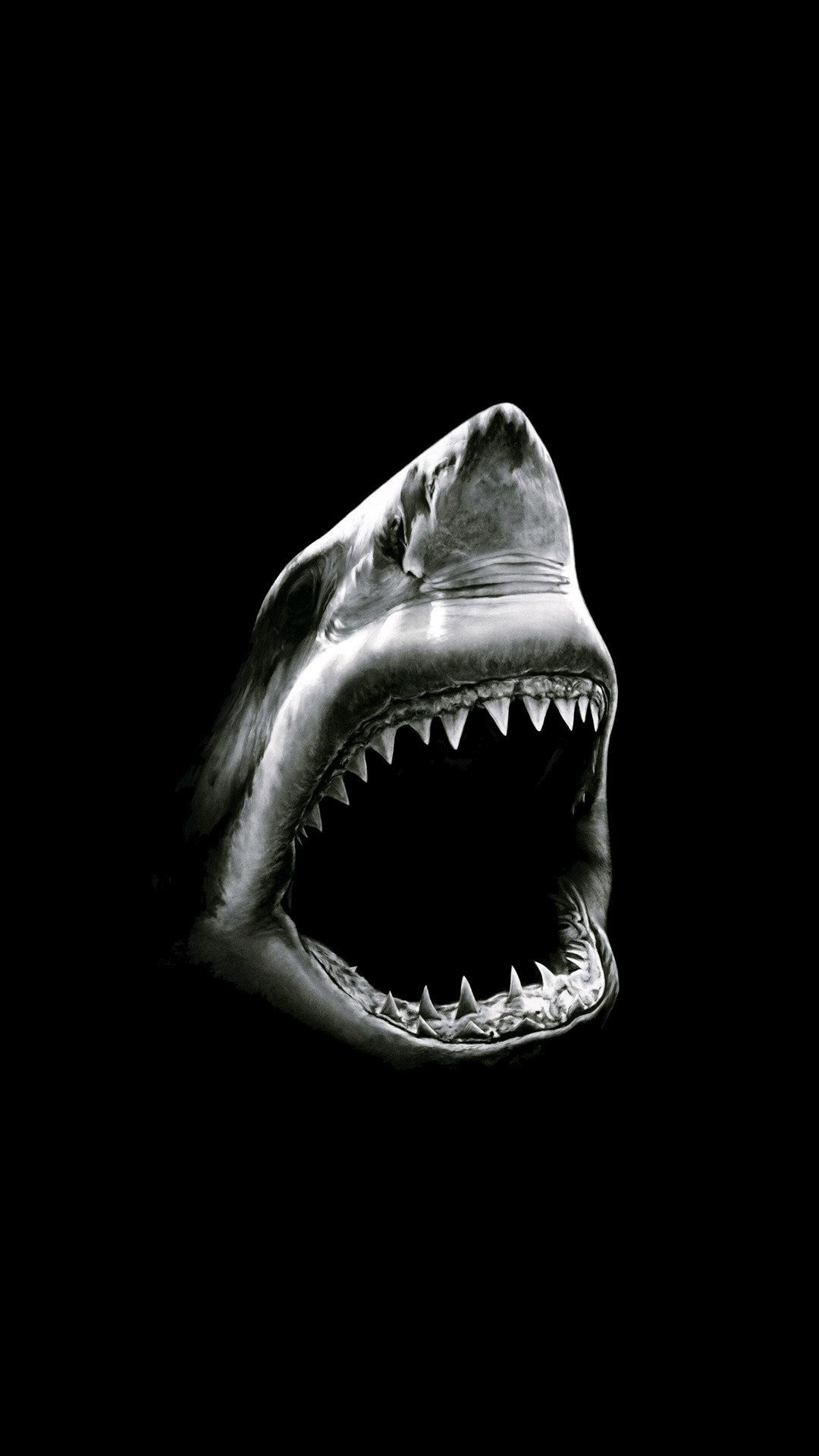 Shark iPhone 7 wallpaper