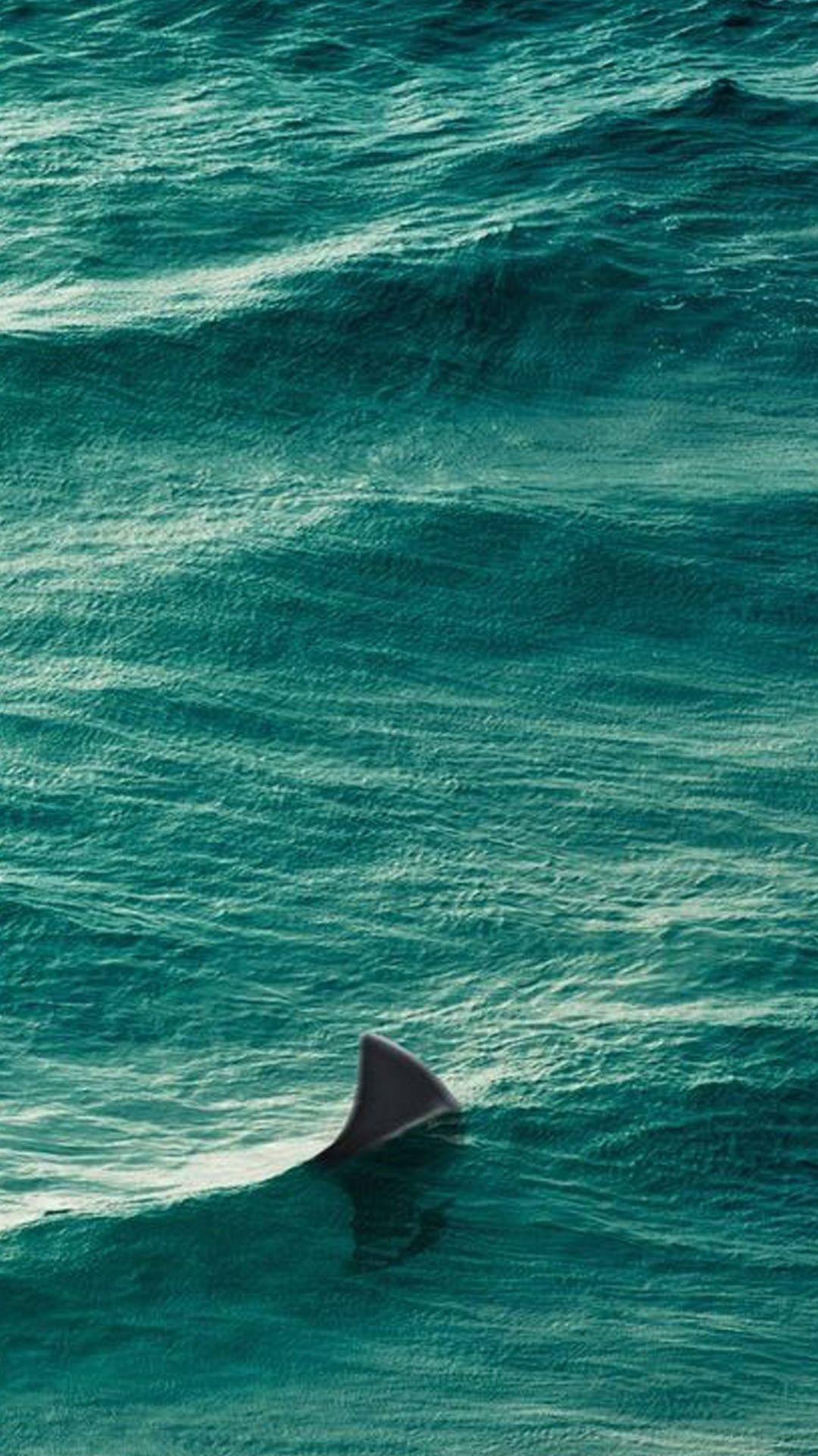 Shark iPhone hd wallpaper