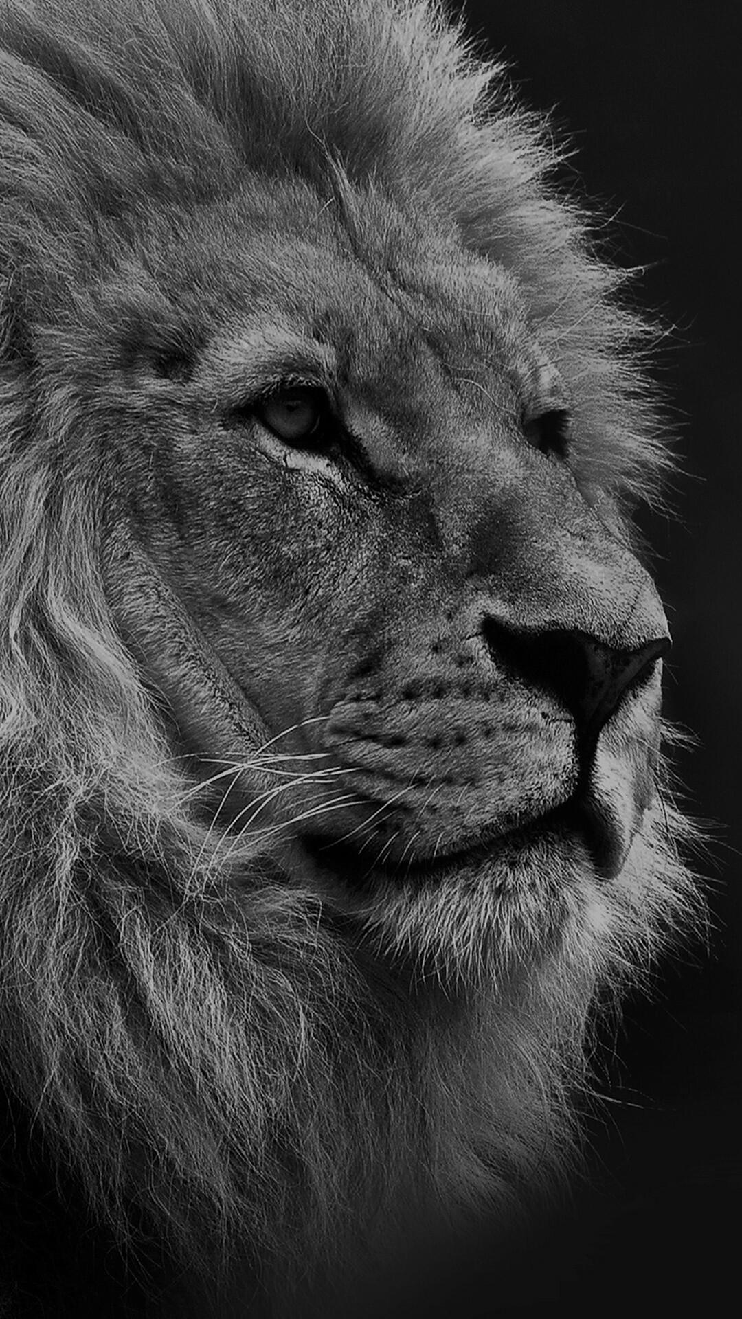 Lion iPhone wallpaper