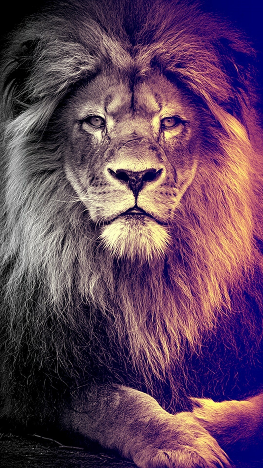 Lion iPhone 5 wallpaper