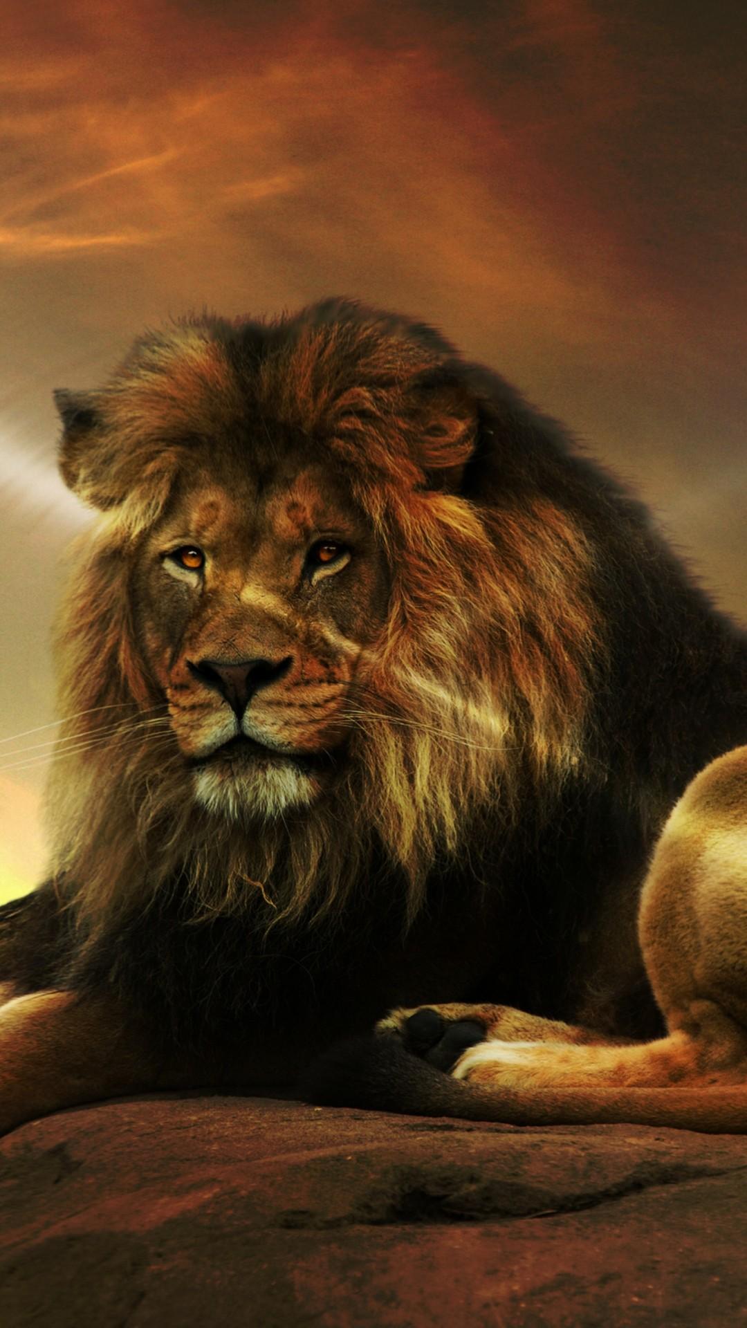 Lion iPhone 6 wallpaper