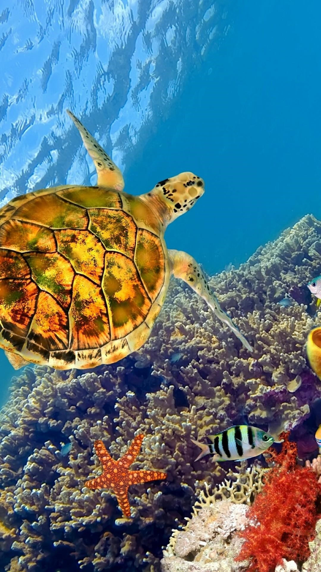 Turtle wallpaper for android
