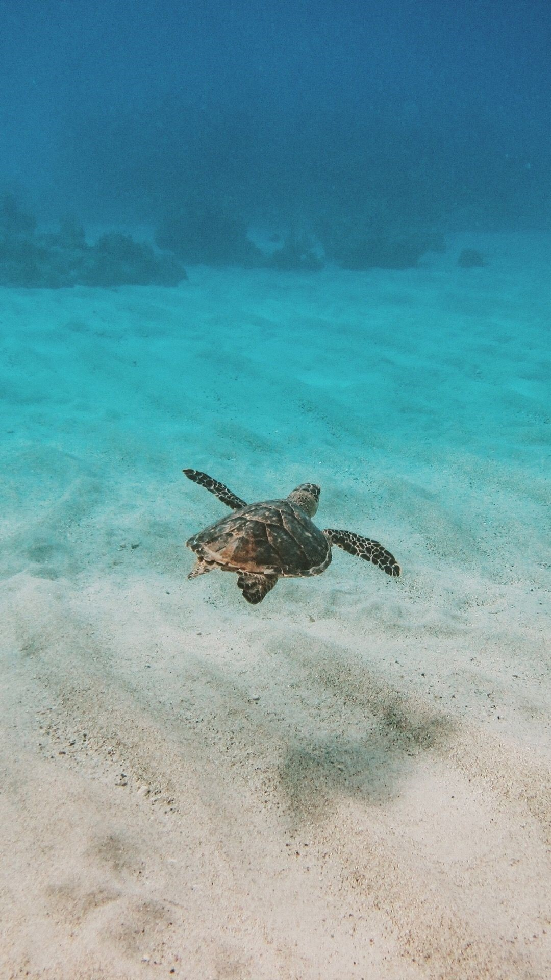 Turtle iPhone 5 wallpaper