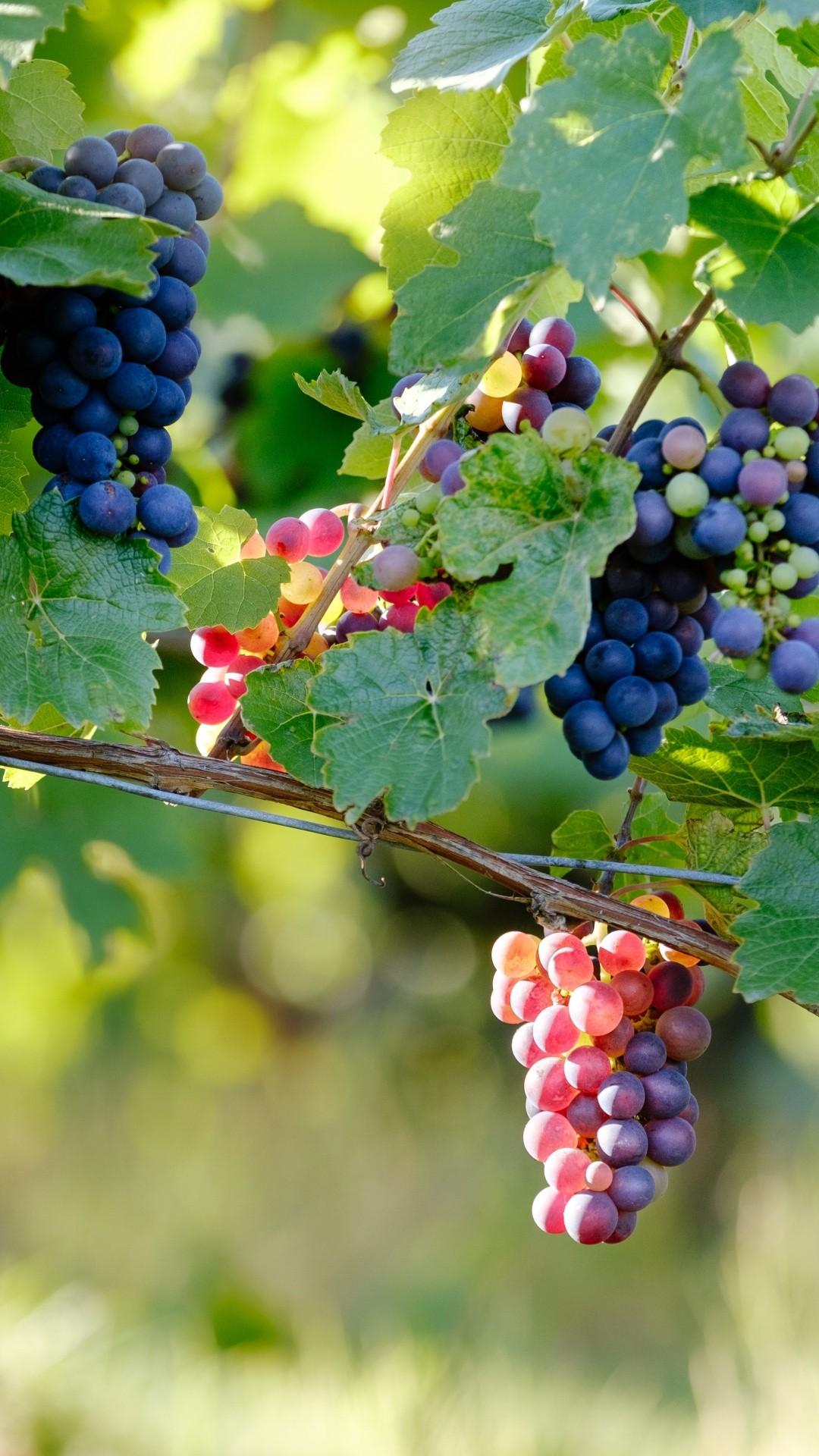 Vineyard Vines hd wallpaper