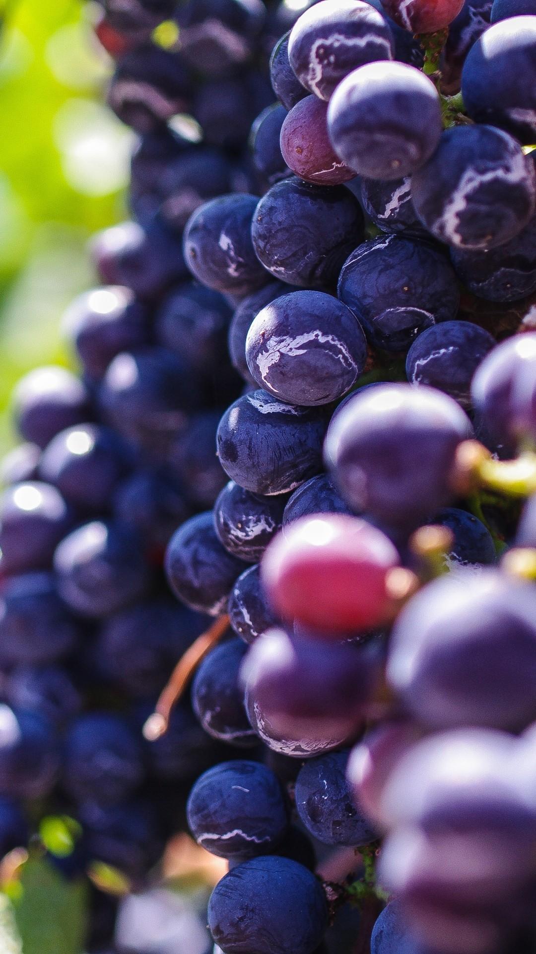 Vineyard Vines iPhone 6 wallpaper