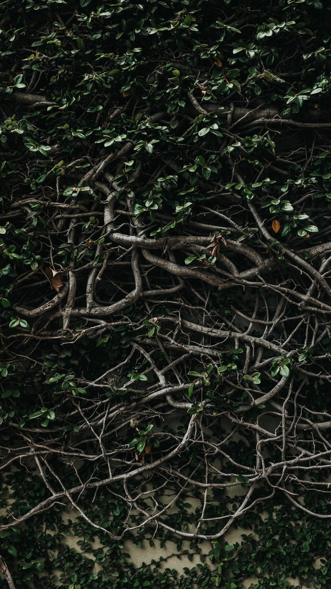 Vineyard Vines wallpaper for iPhone