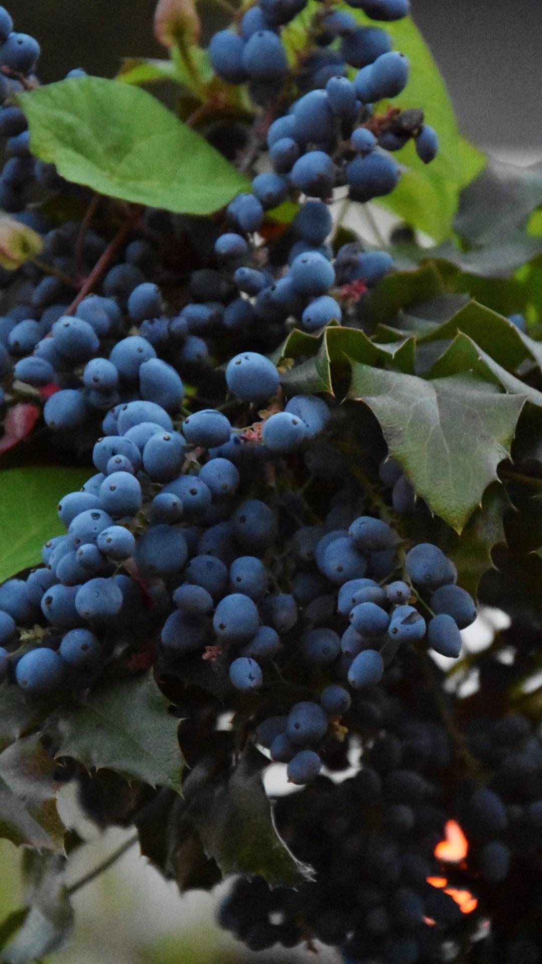 Vineyard Vines iPhone wallpaper