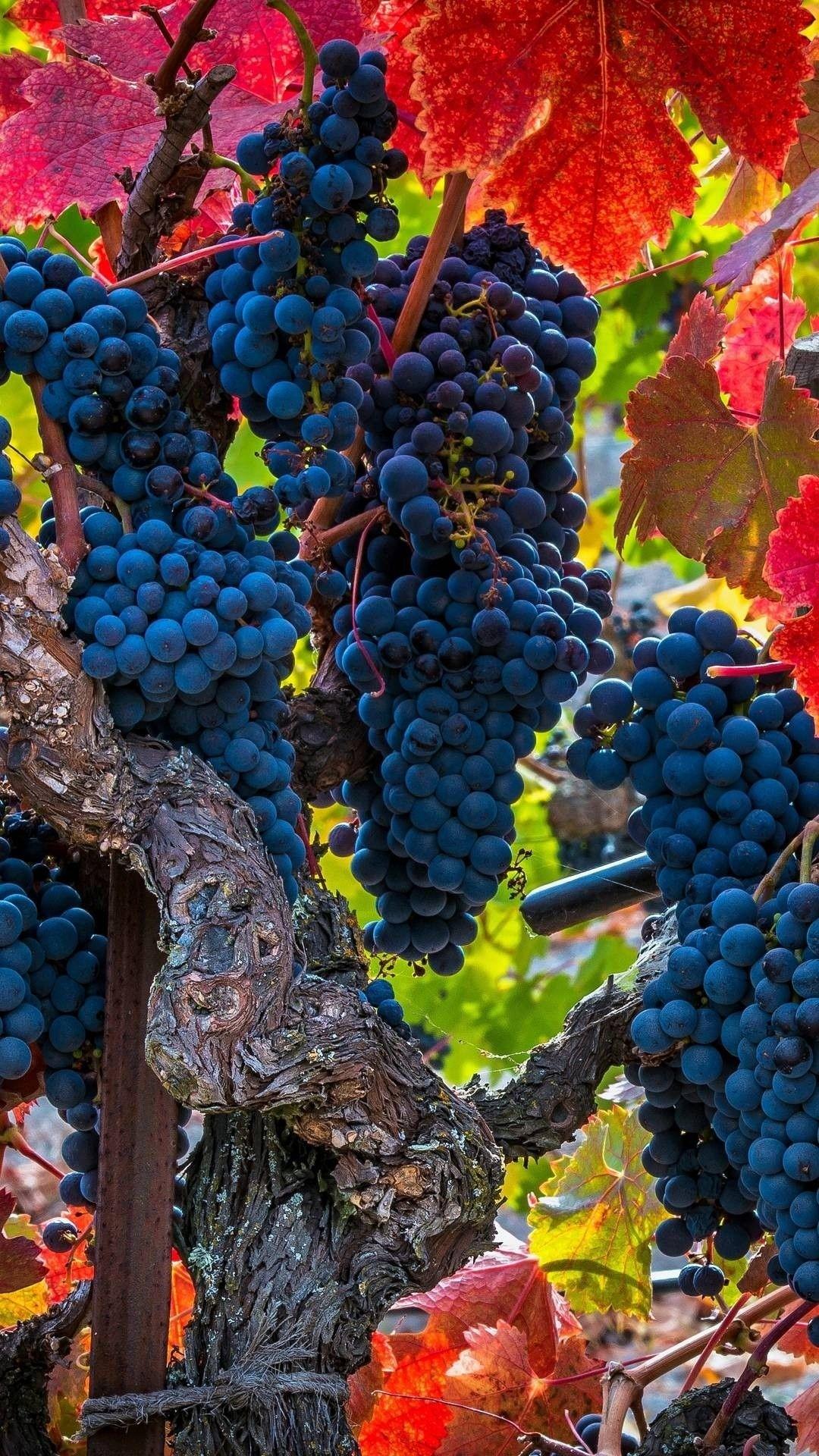 Vineyard Vines iPhone 5 wallpaper