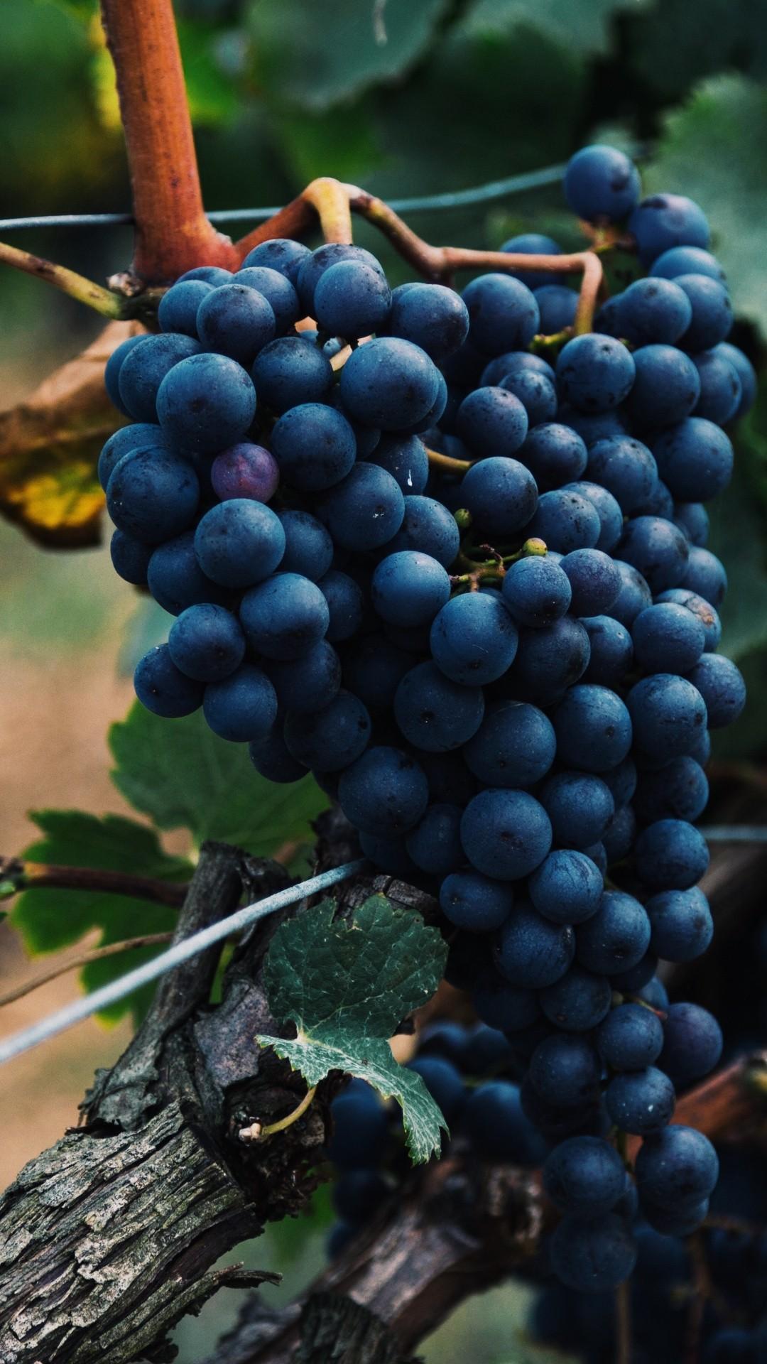 Vineyard Vines iPhone hd wallpaper