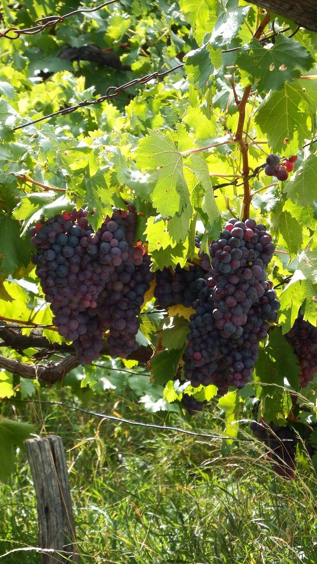 Vineyard Vines phone background