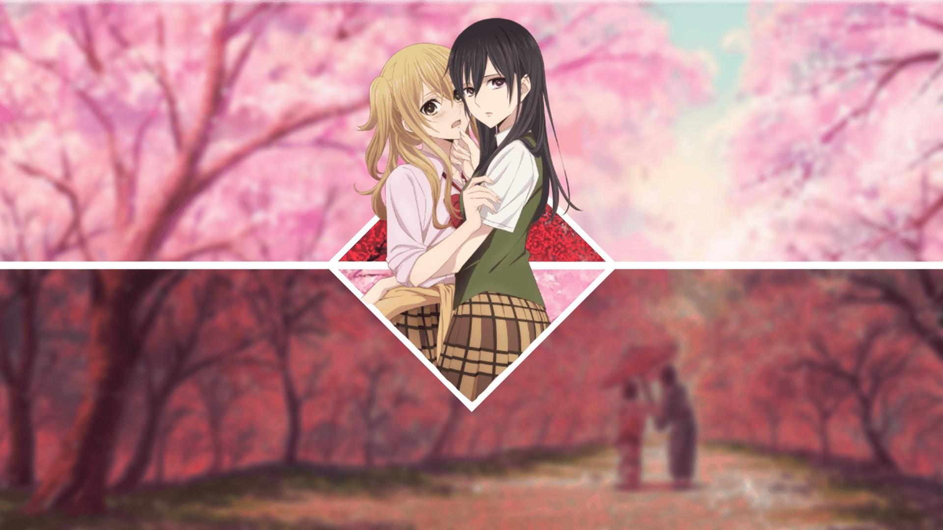 Citrus Anime HD wallpaper