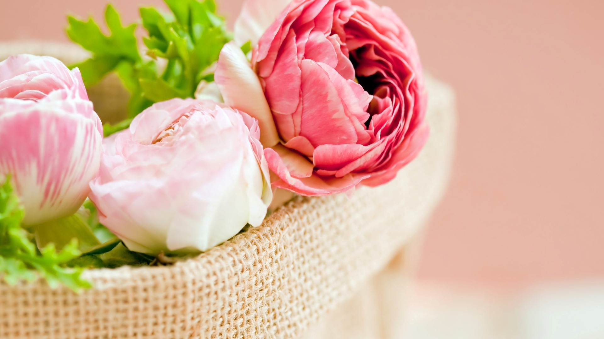 Peonies wallpaper and themes