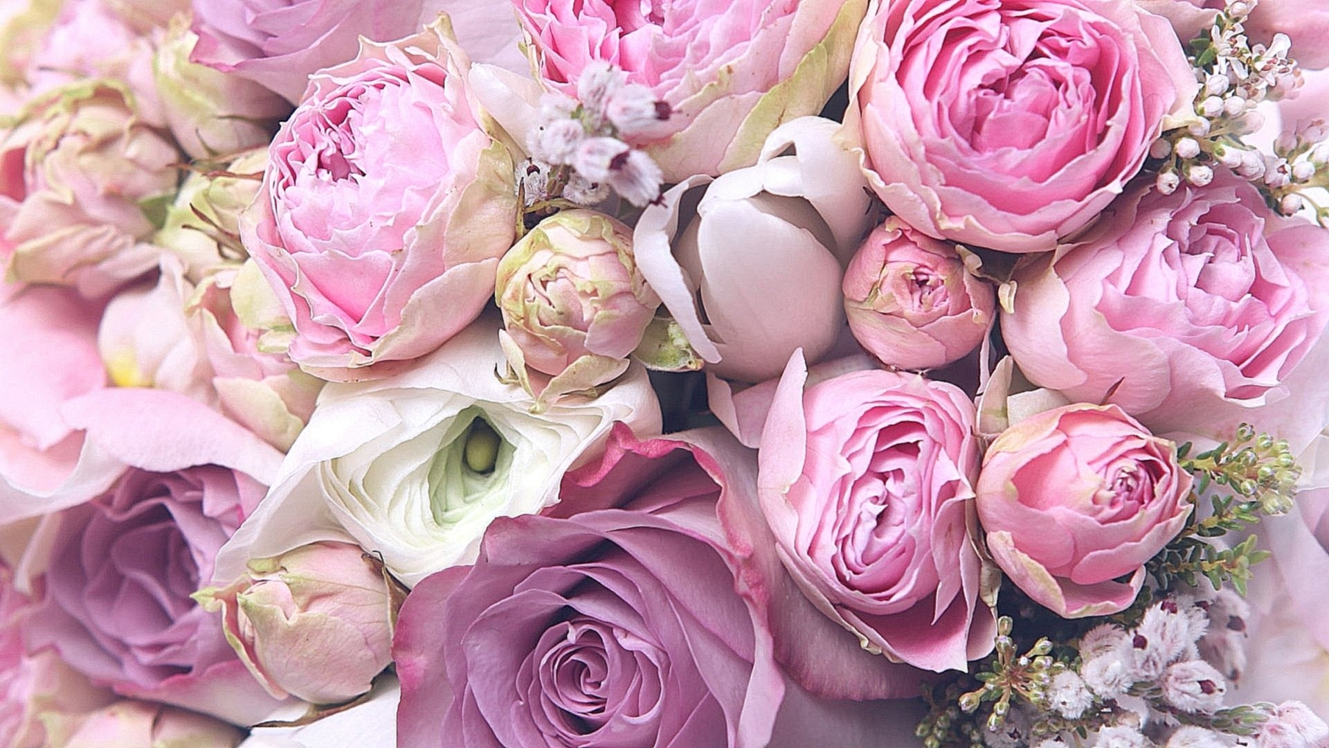 Peonies Picture