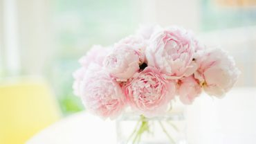 Peonies Wallpaper Theme