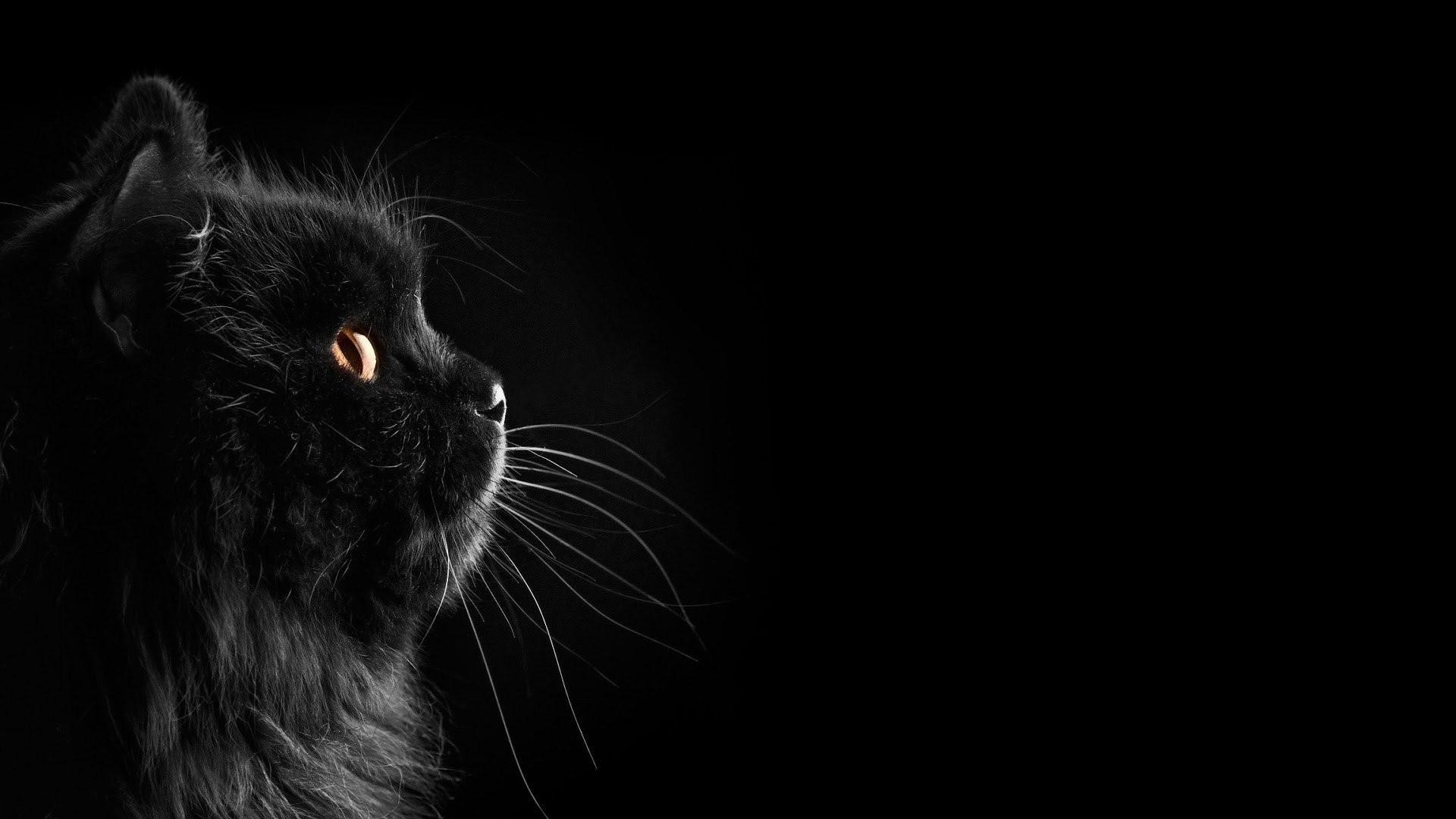 Cute Black Desktop wallpaper