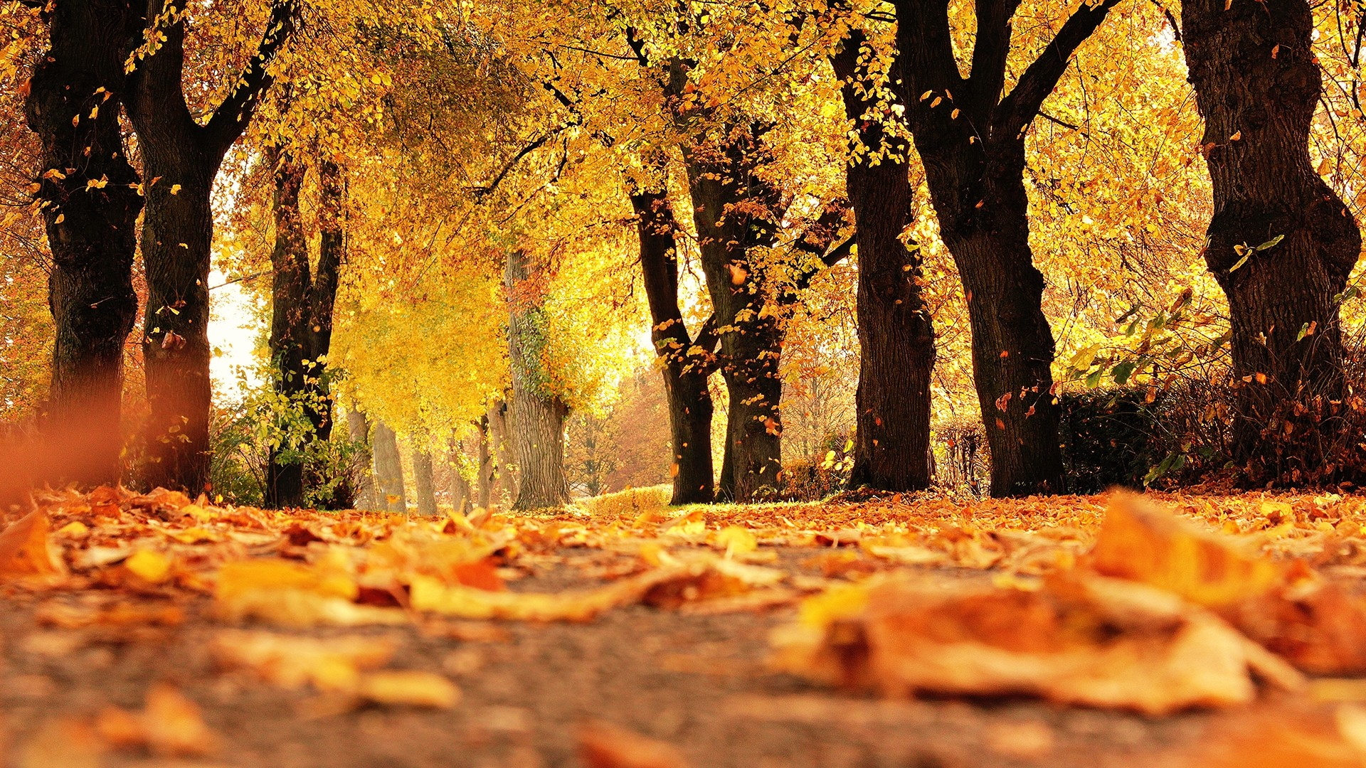 Cute Fall Wallpaper and Background