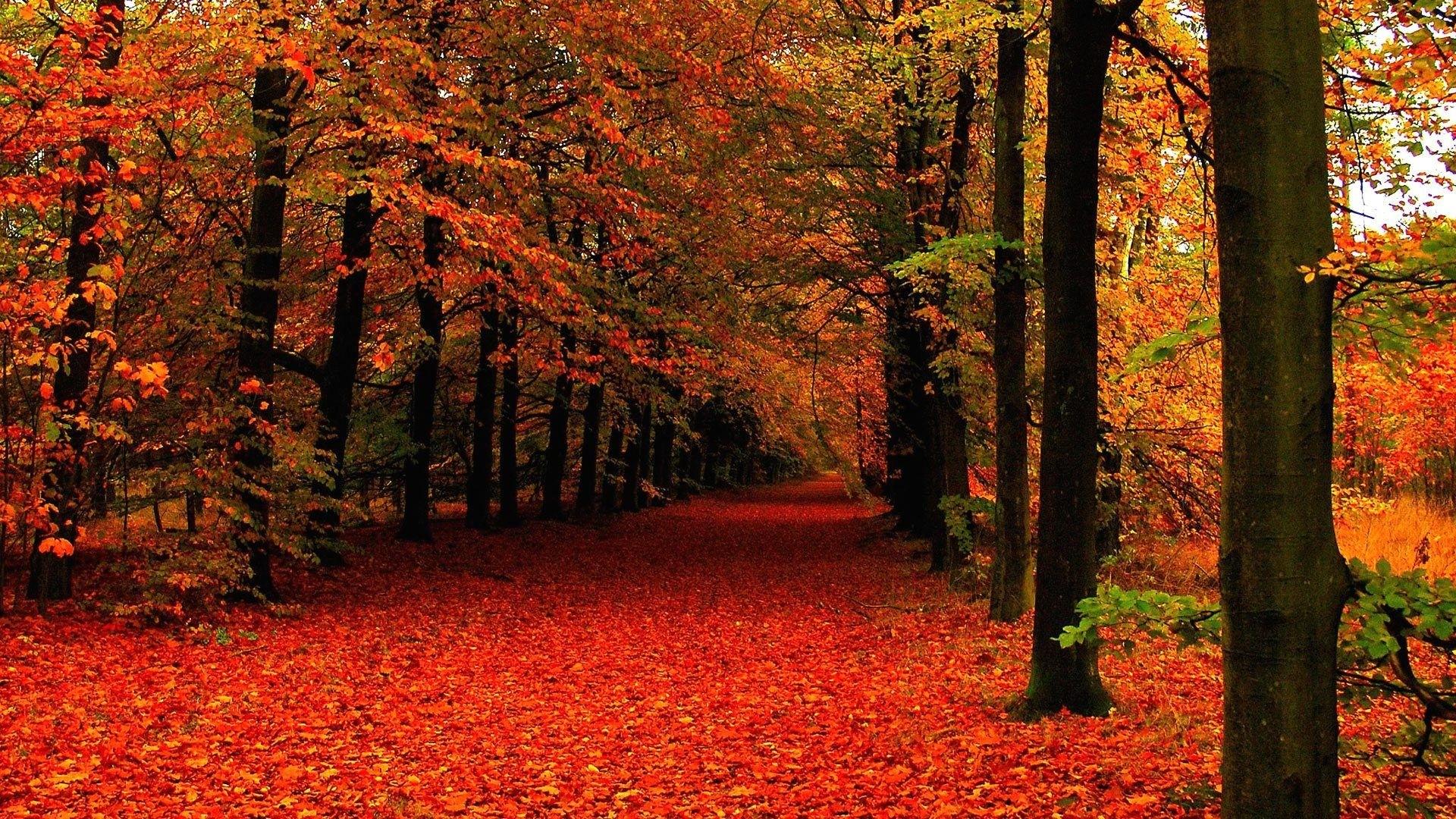 Cute Fall HD Wallpaper