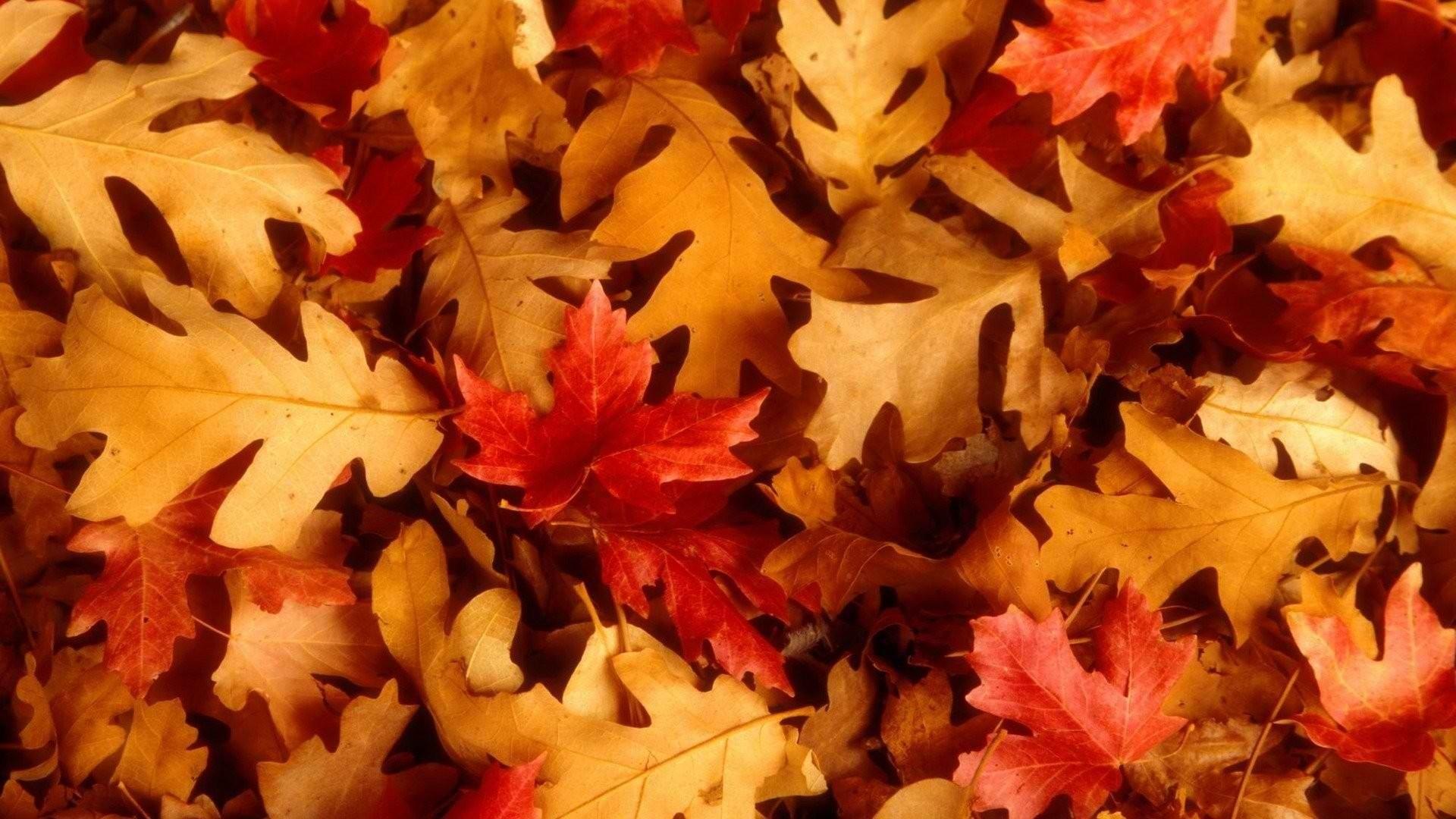 Cute Fall Download Wallpaper