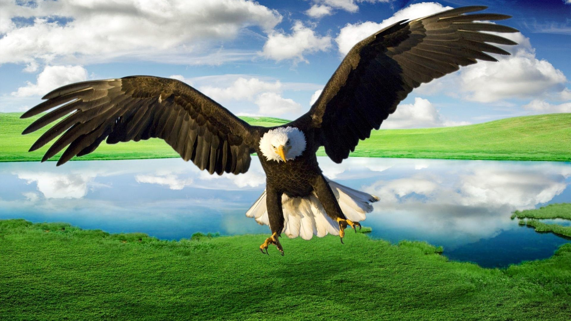 Eagle Wallpaper and Background