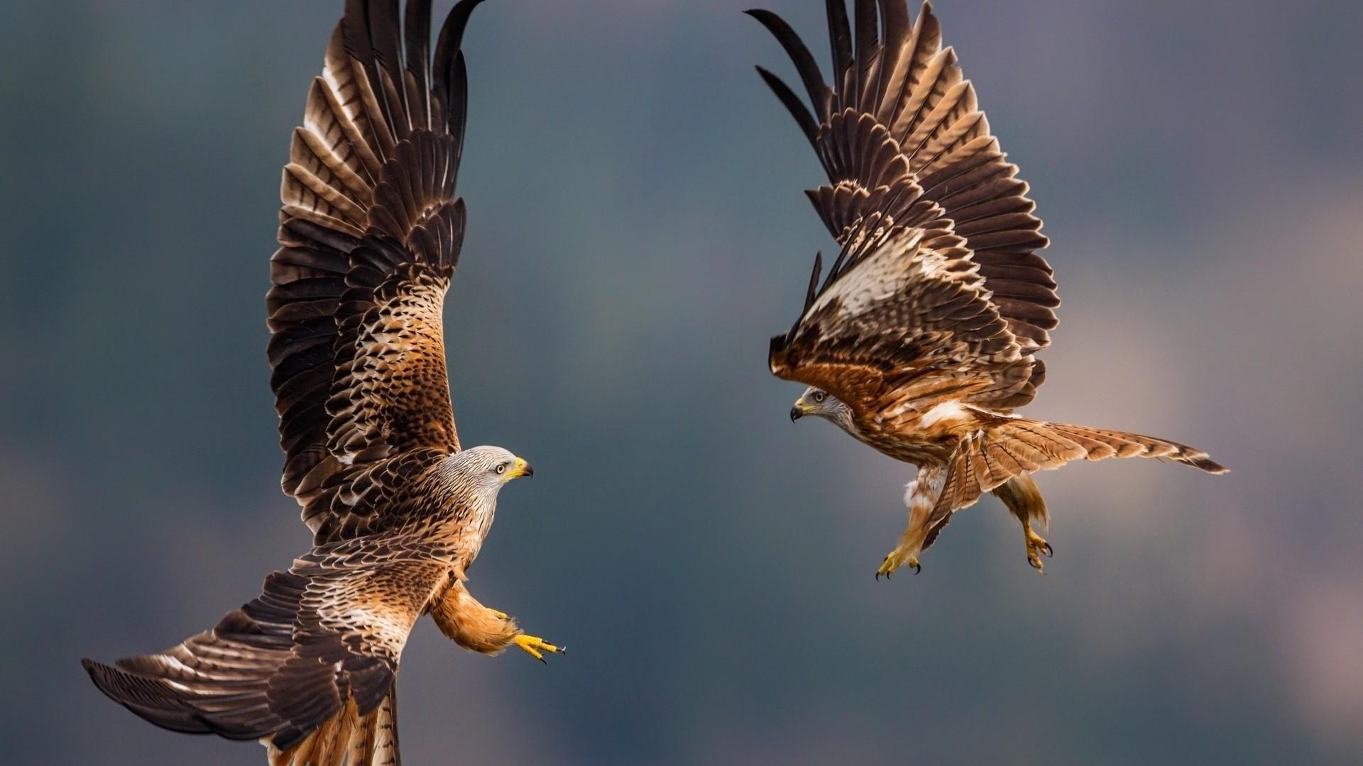 Eagle wallpaper photo hd