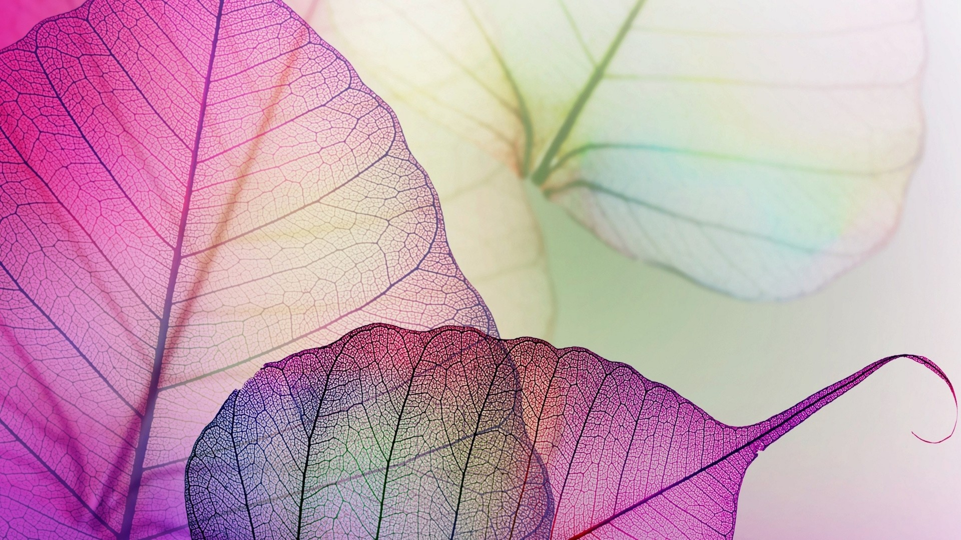 Leaf Wallpaper theme