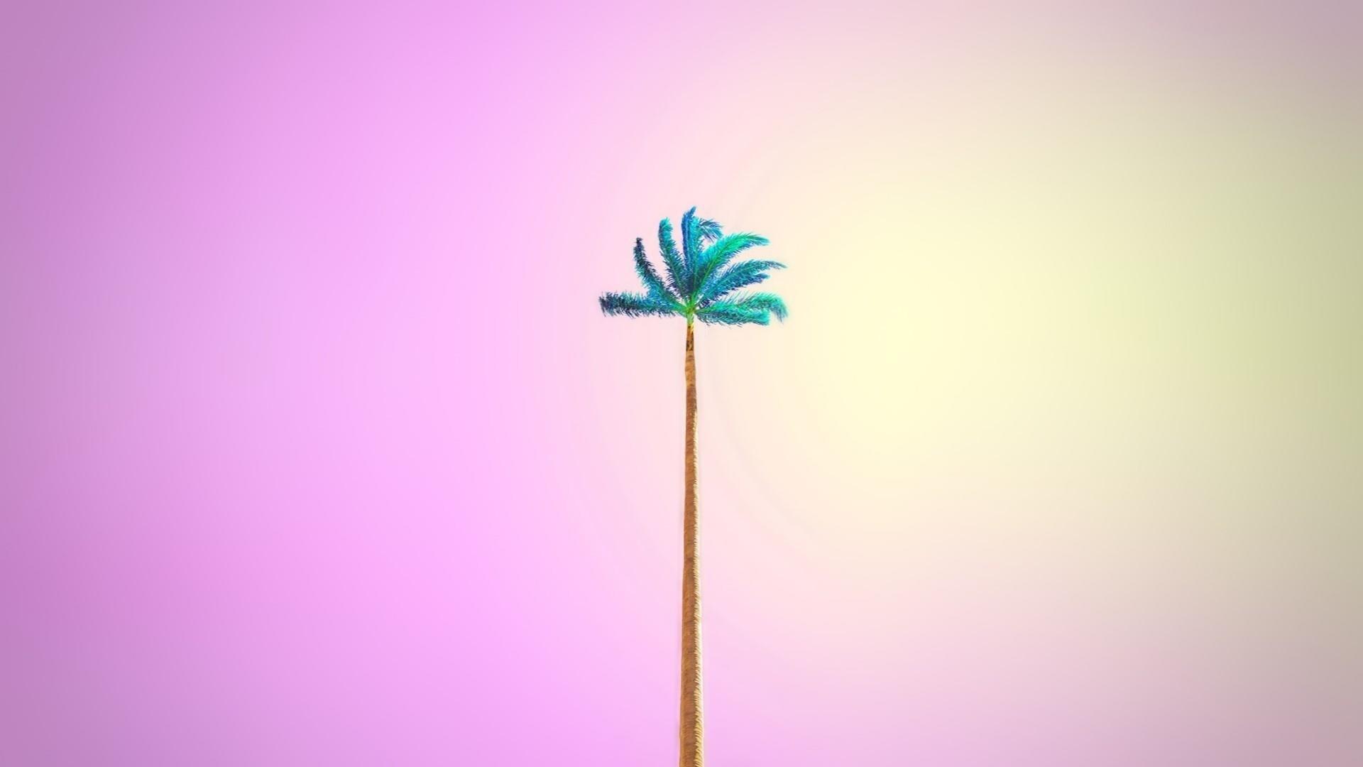 Palm Tree a wallpaper