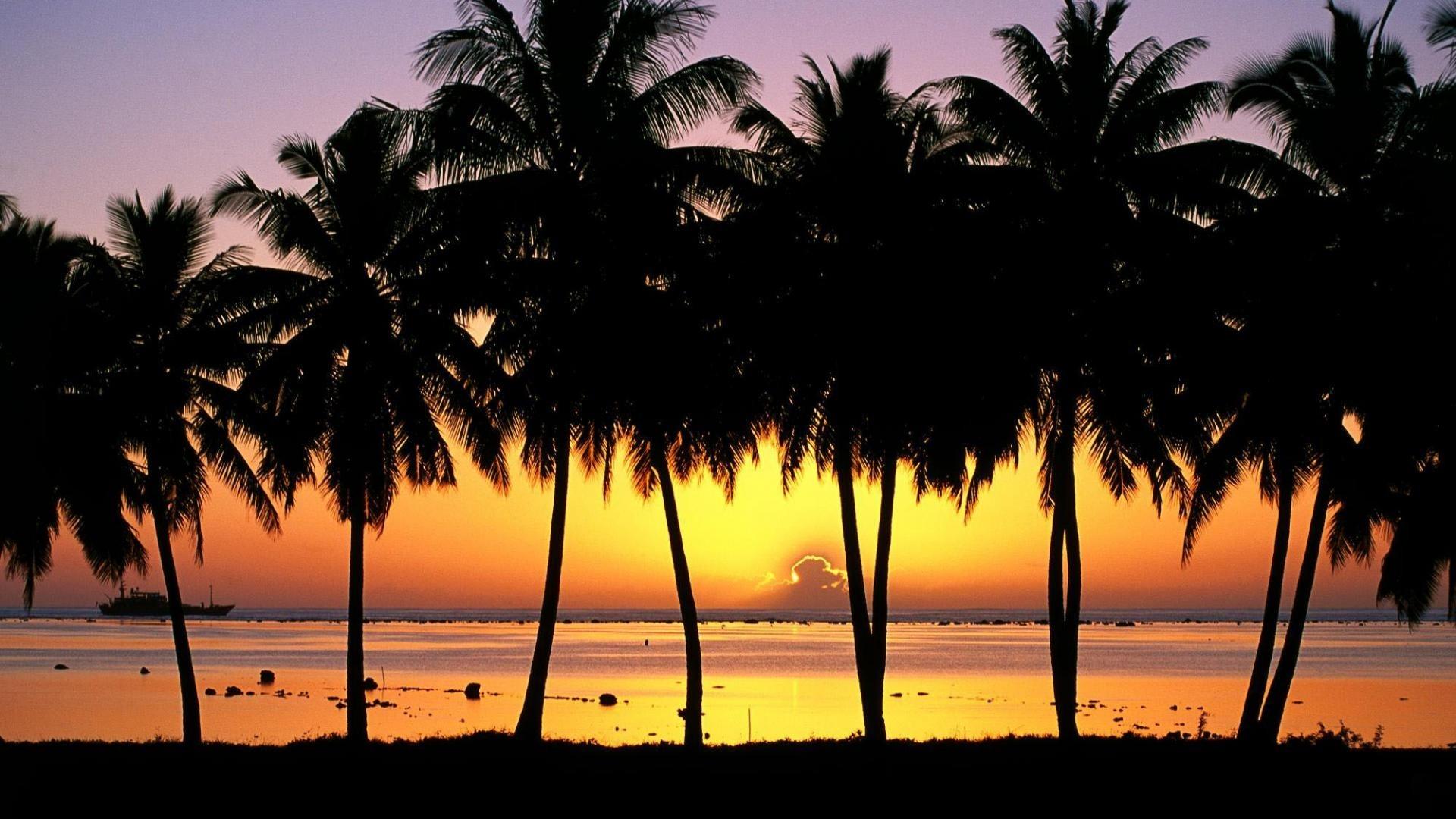 Palm Tree Free Wallpaper