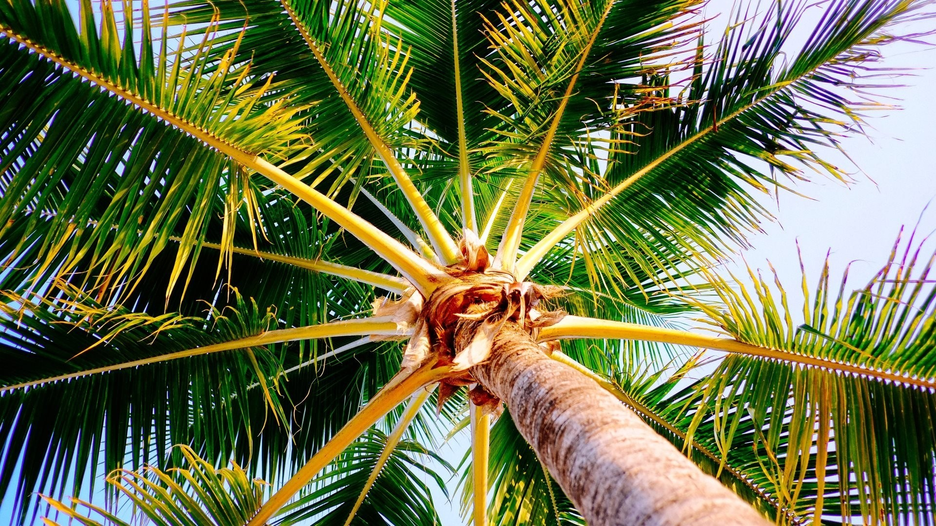 Palm Tree HD Download