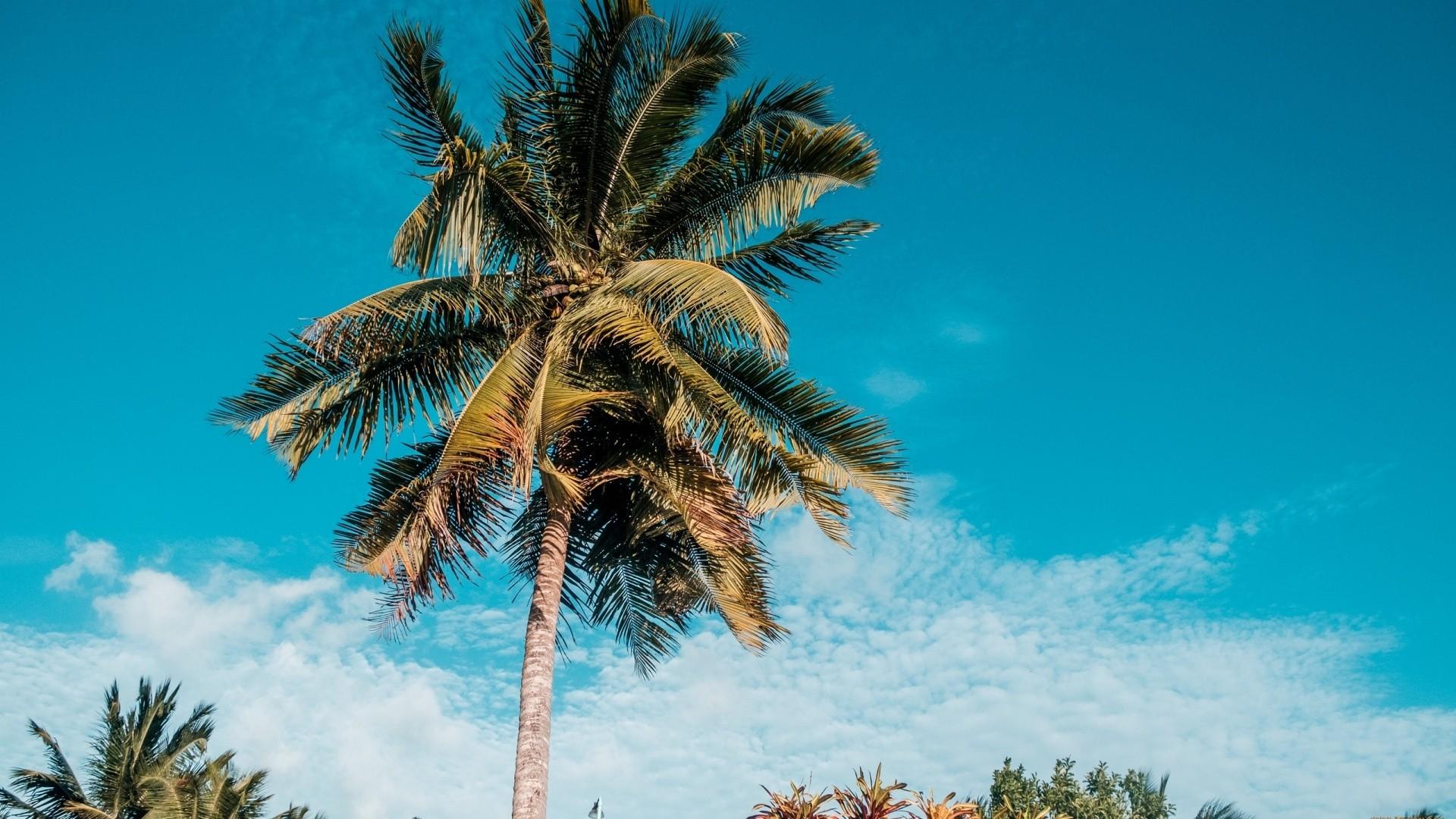 Palm Tree High Quality