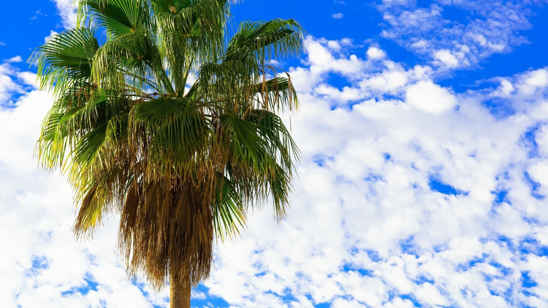 Palm Tree Wallpaper Picture hd